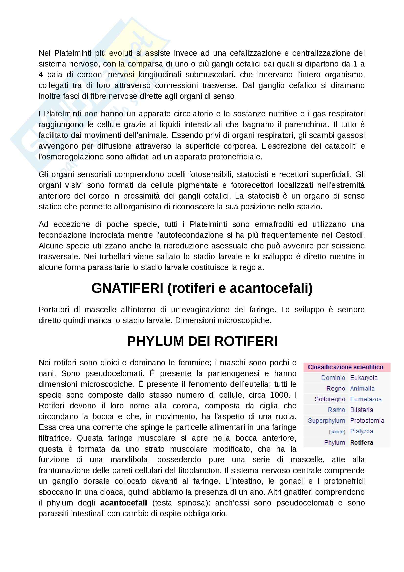 Zoologia  - Appunti Pag. 6