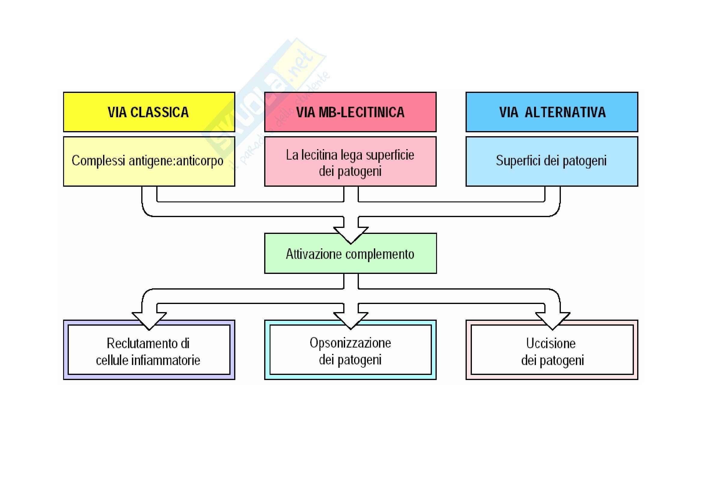 Immunologia - il sistema del complemento Pag. 2