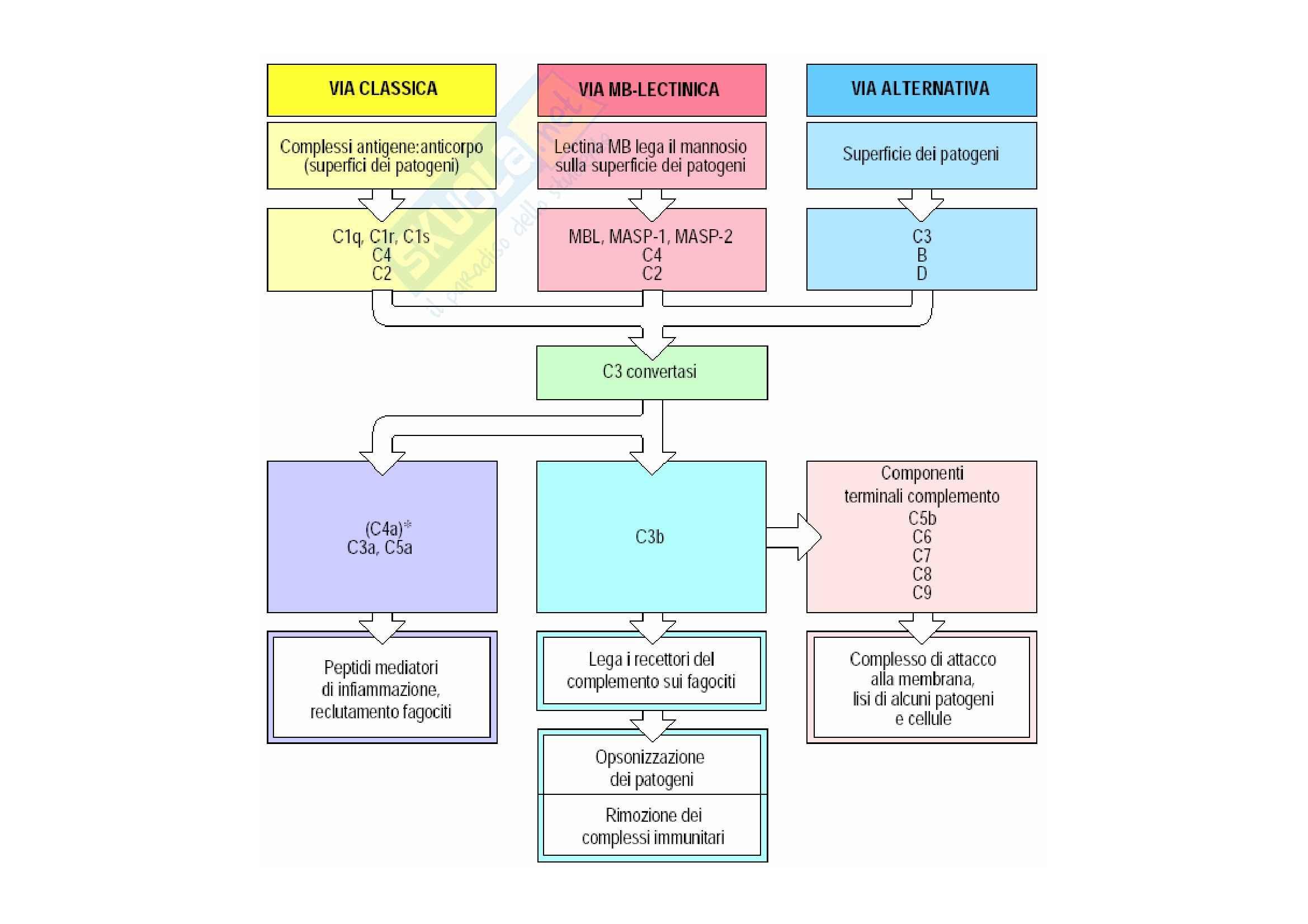 Immunologia - il sistema del complemento Pag. 6