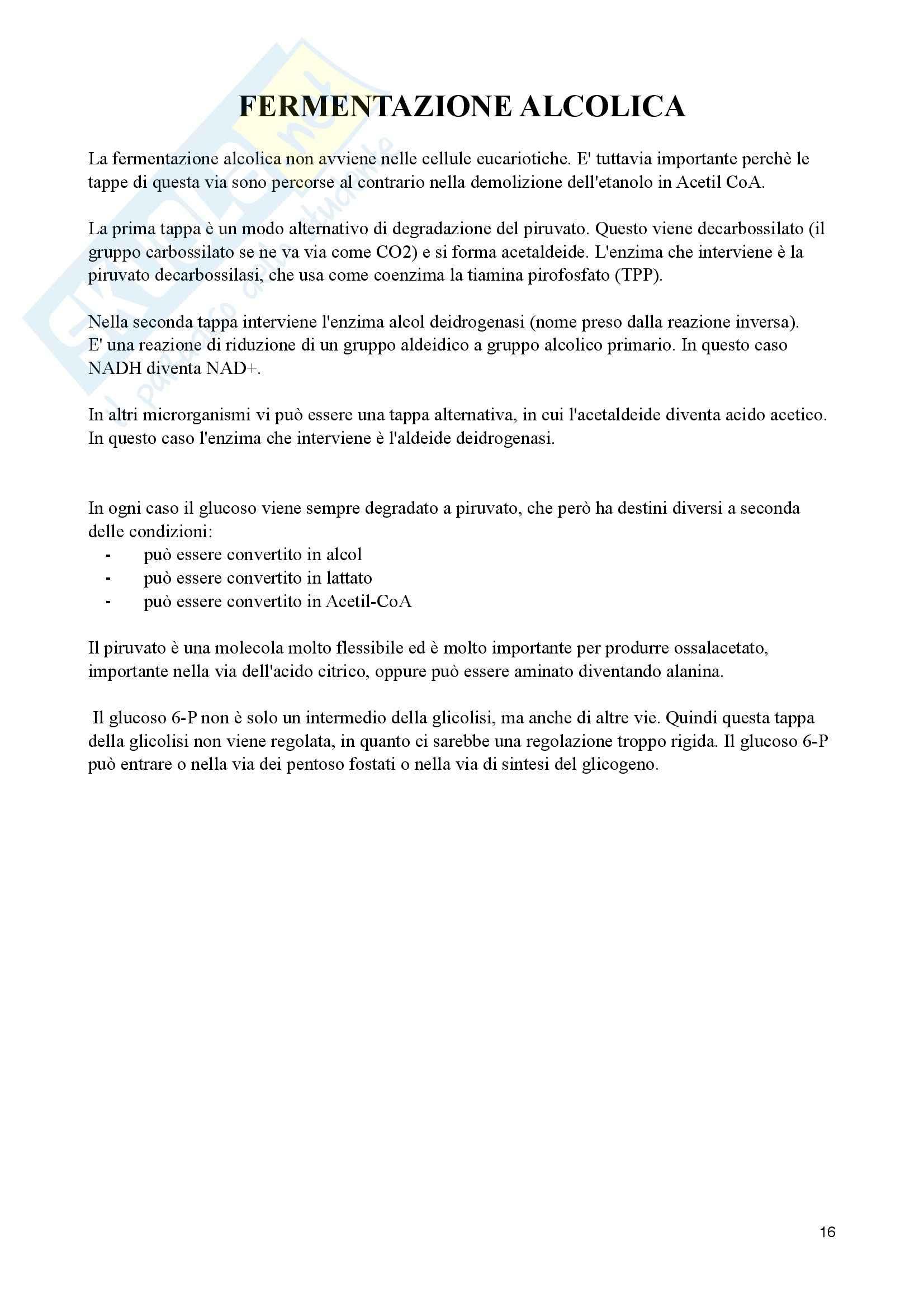 Appunti di Biochimica Metabolica Pag. 16
