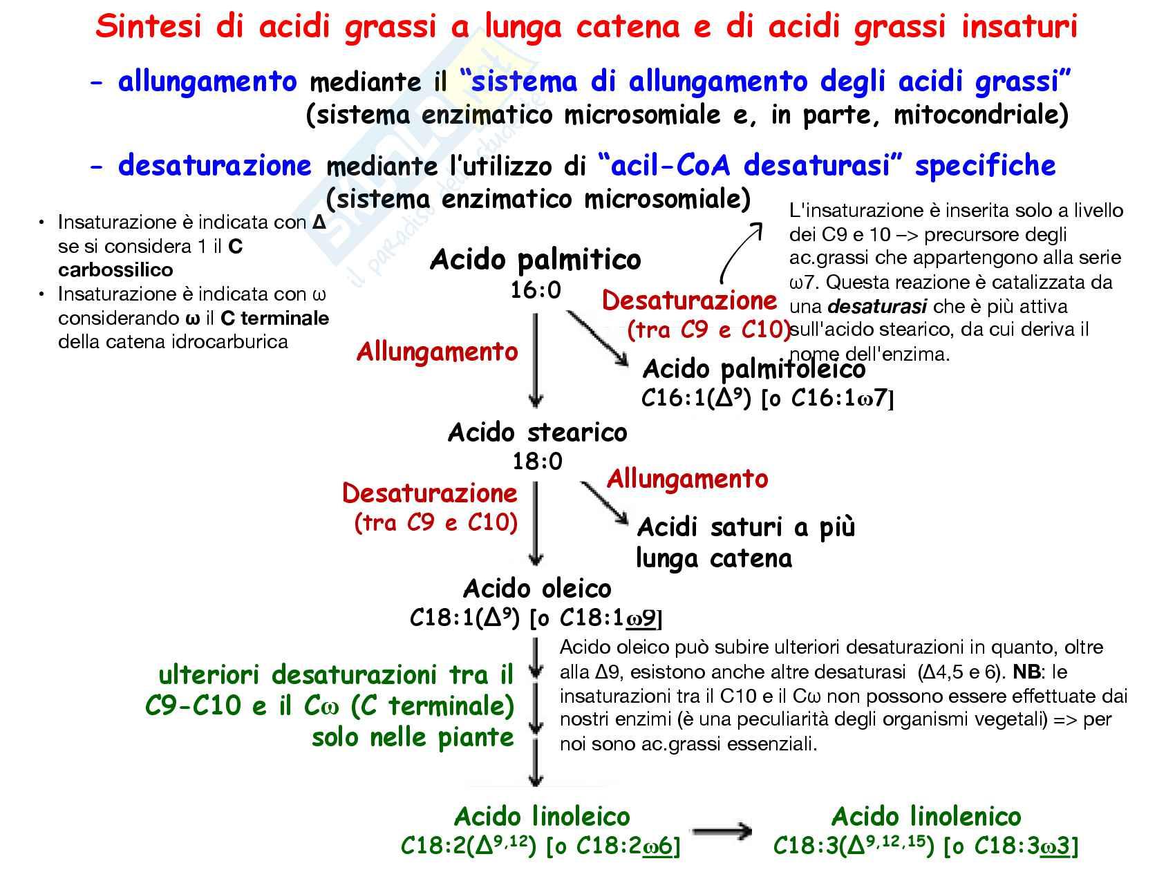 13 Allungamento e desaturazione degli acidi grassi Pag. 2