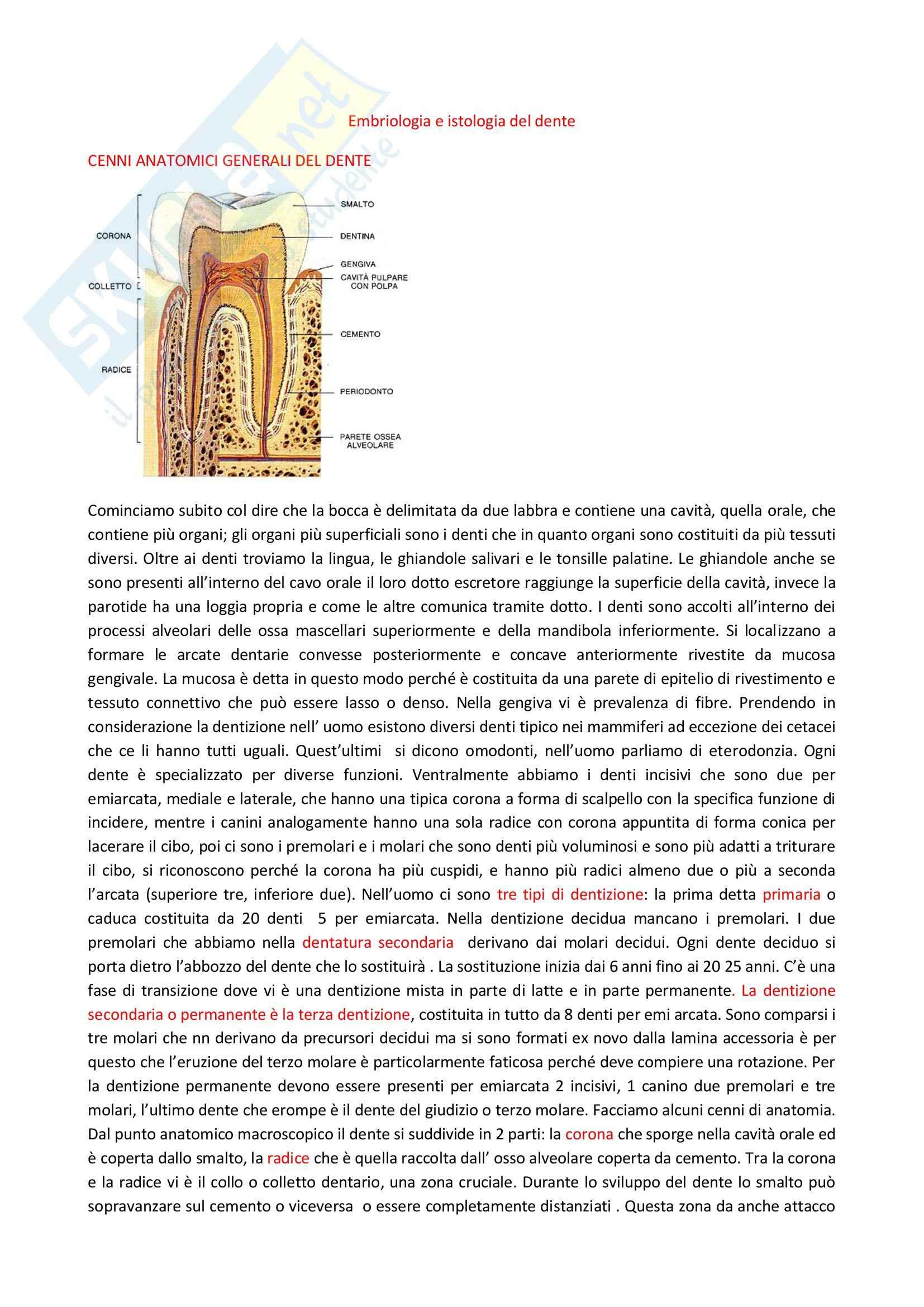 Citologia, embriologia e istologia - nascita, sviluppo e struttura del dente