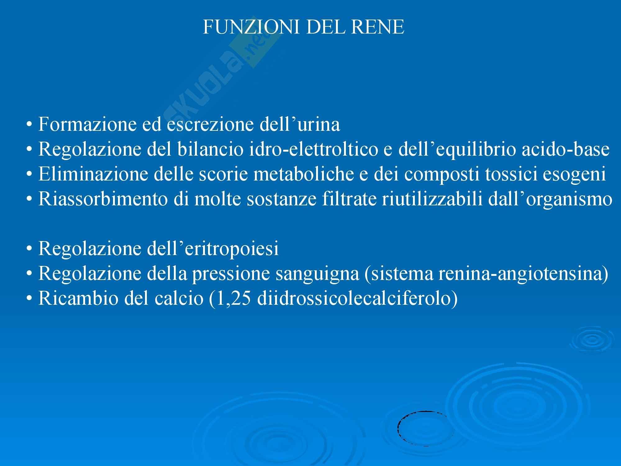 Fisiopatologia - Reni