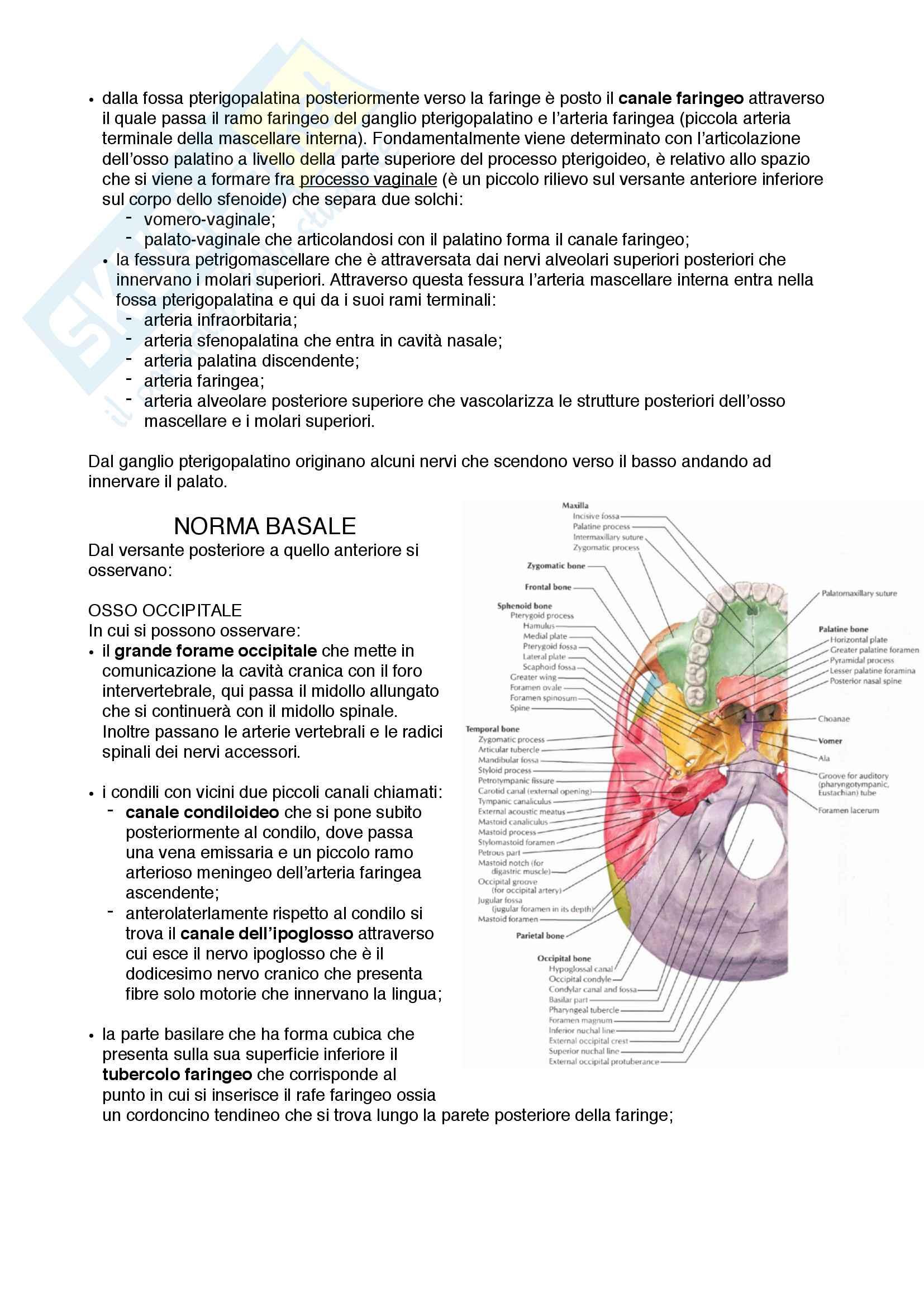 Documento completo per esame di Anatomia I-Testa e collo, UNIPD Pag. 11