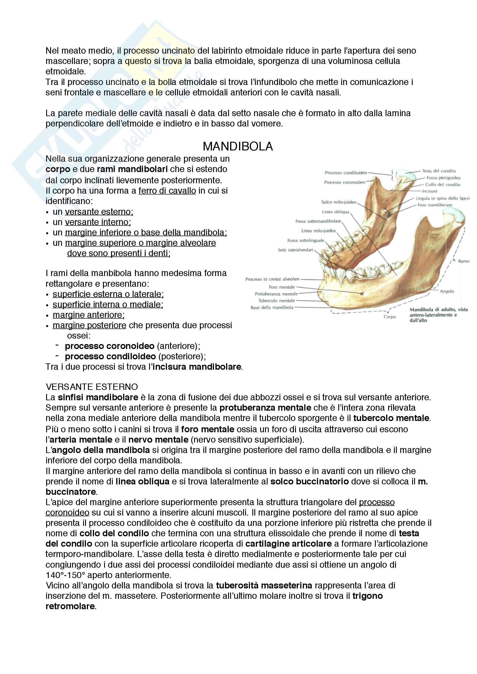Documento completo per esame di Anatomia I-Testa e collo, UNIPD Pag. 21