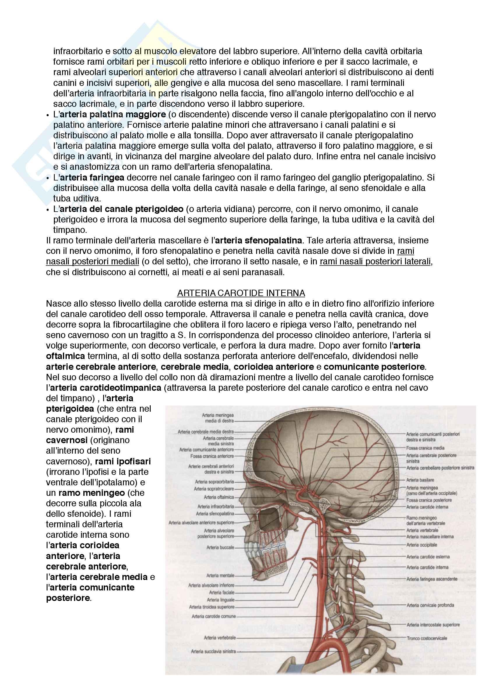 Documento completo per esame di Anatomia I-Testa e collo, UNIPD Pag. 41