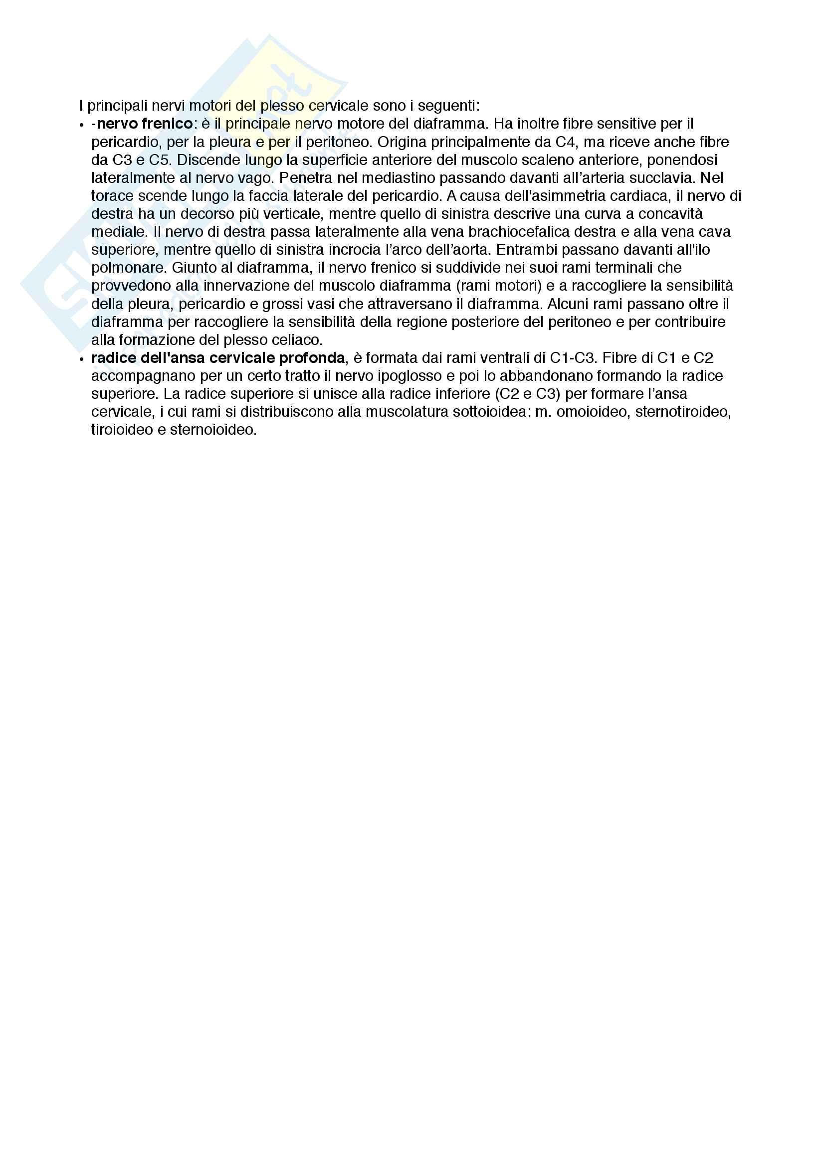 Documento completo per esame di Anatomia I-Testa e collo, UNIPD Pag. 46