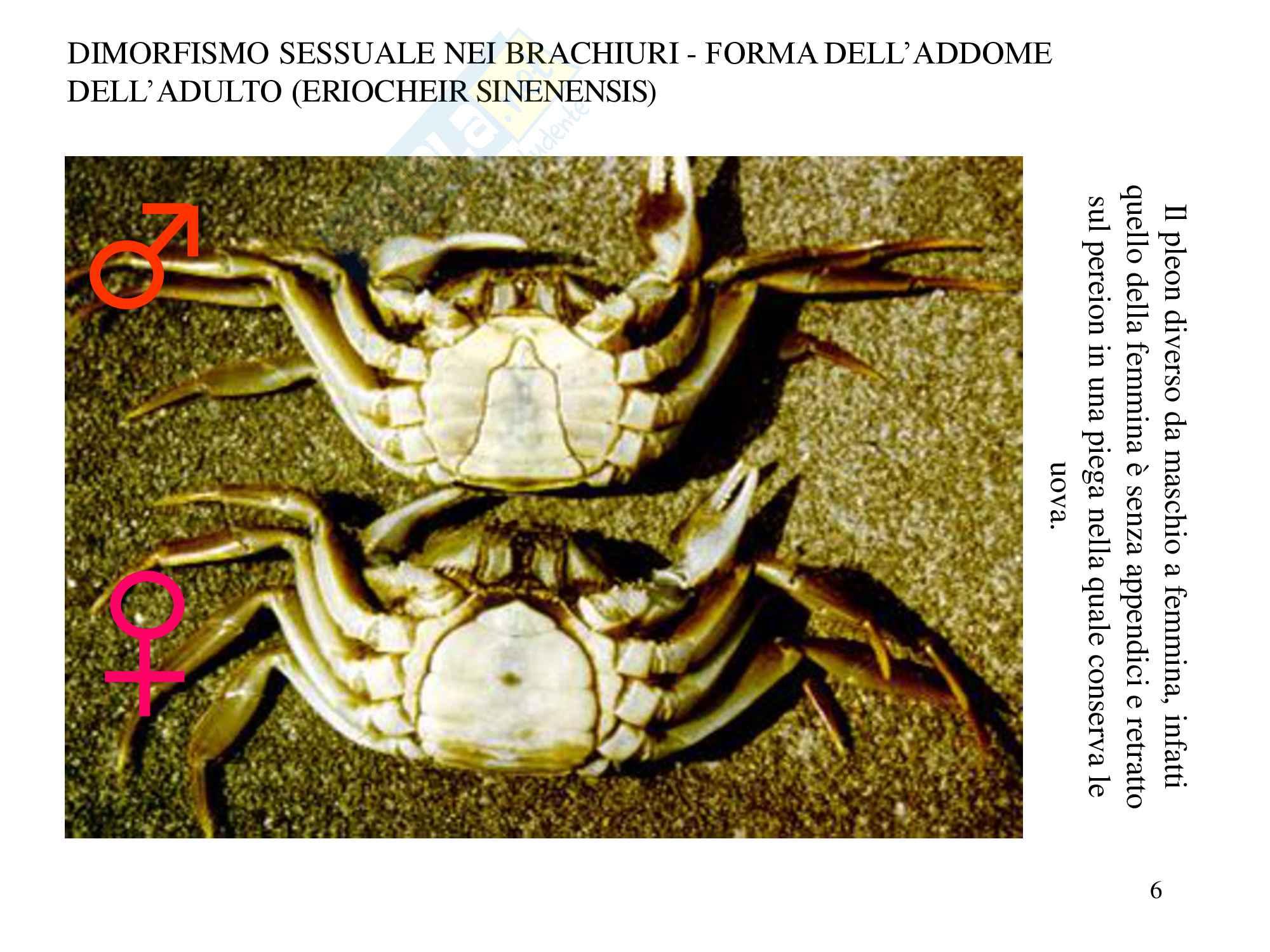 Crostacei e miriapodi, zoologia, scienze biologiche Pag. 6