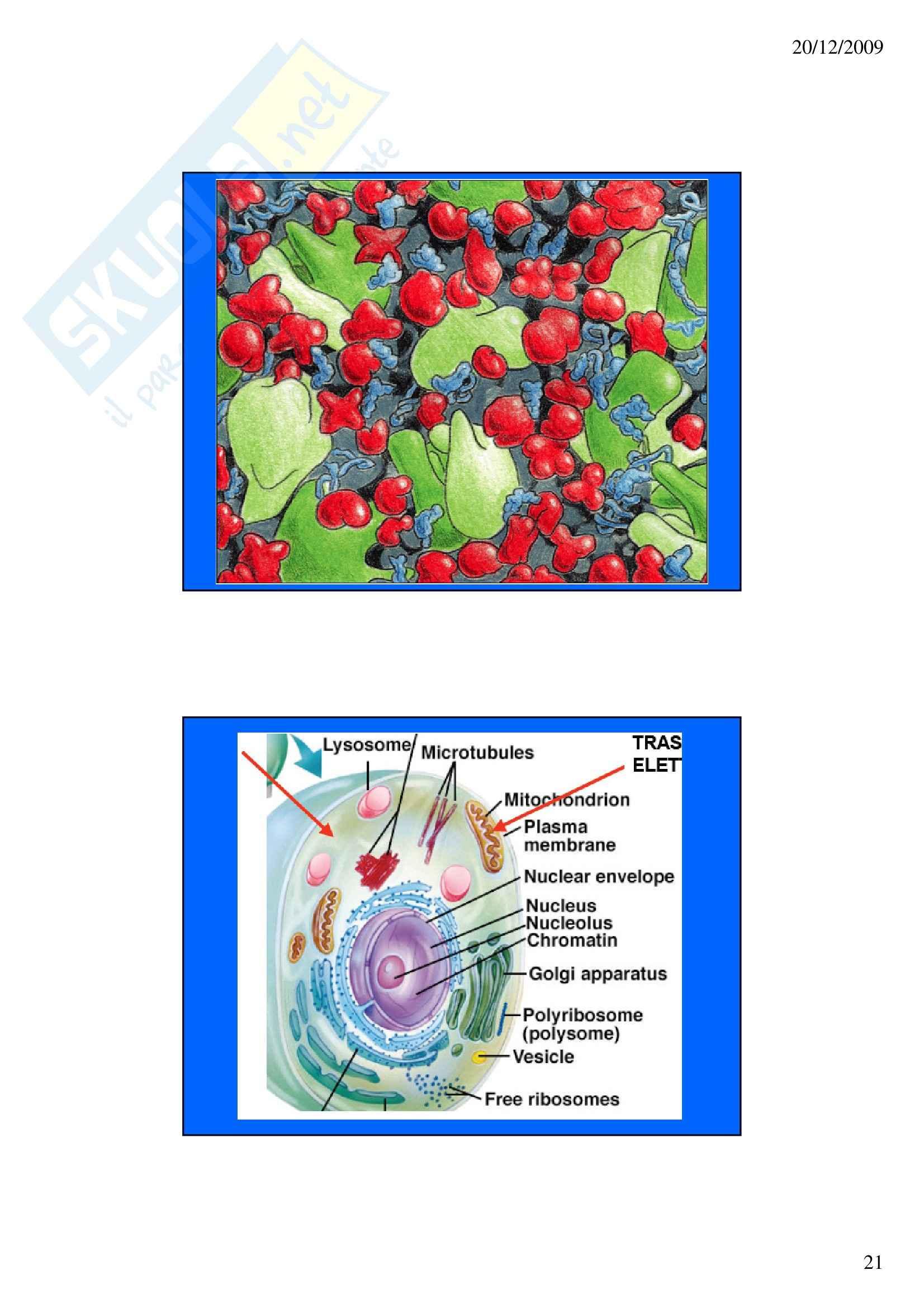 Biochimica – Introduzione – Slides Pag. 21