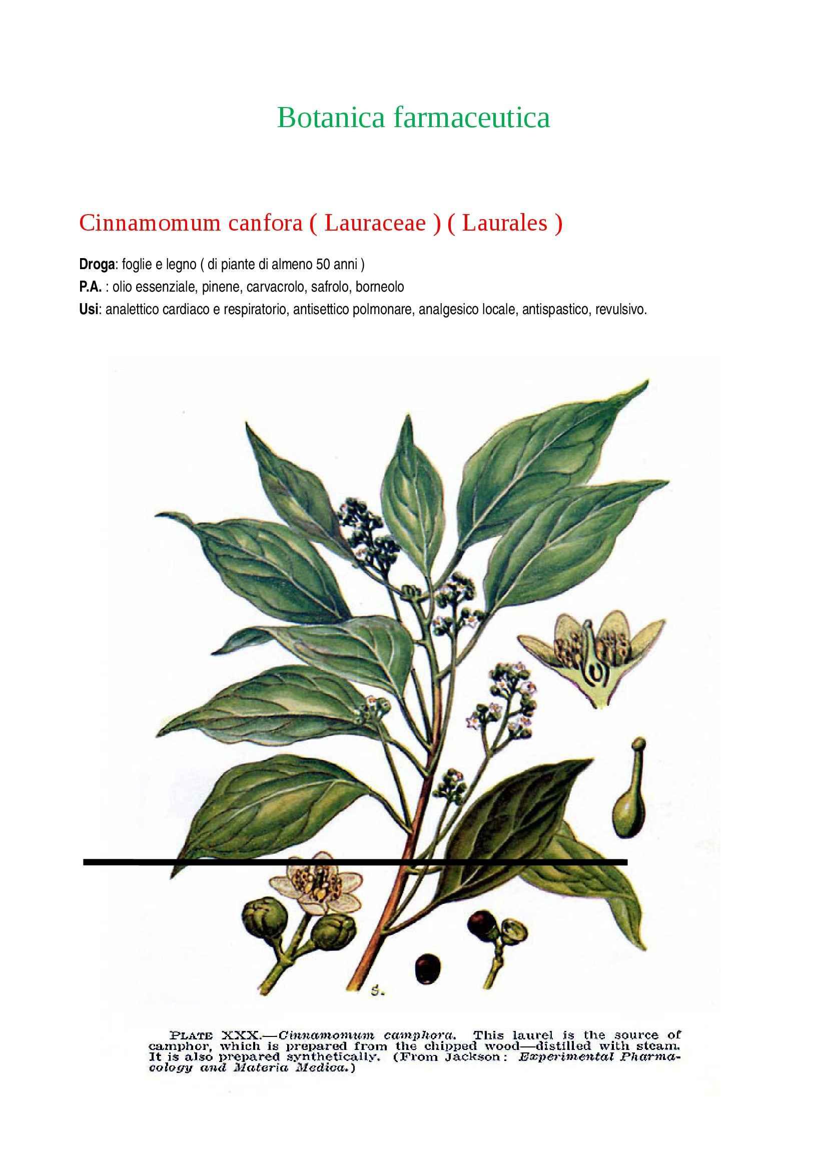 Appunti per l'esame di Botanica farmaceutica