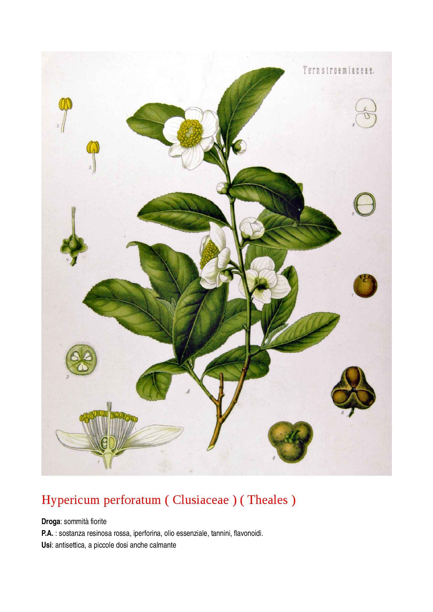 Botanica farmaceutica Pag. 16