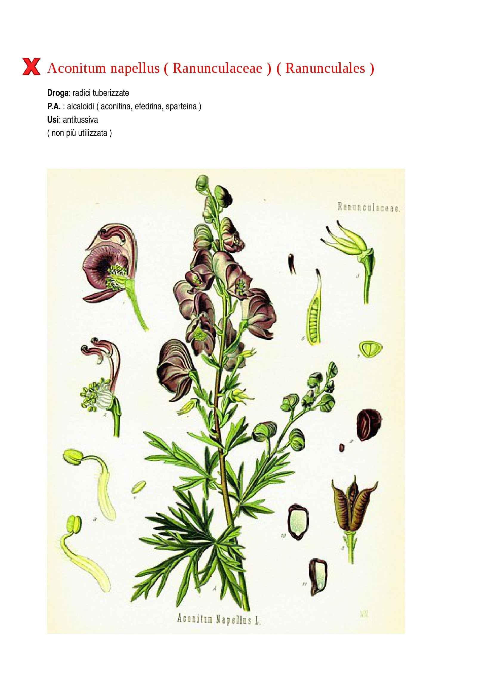 Botanica farmaceutica Pag. 2