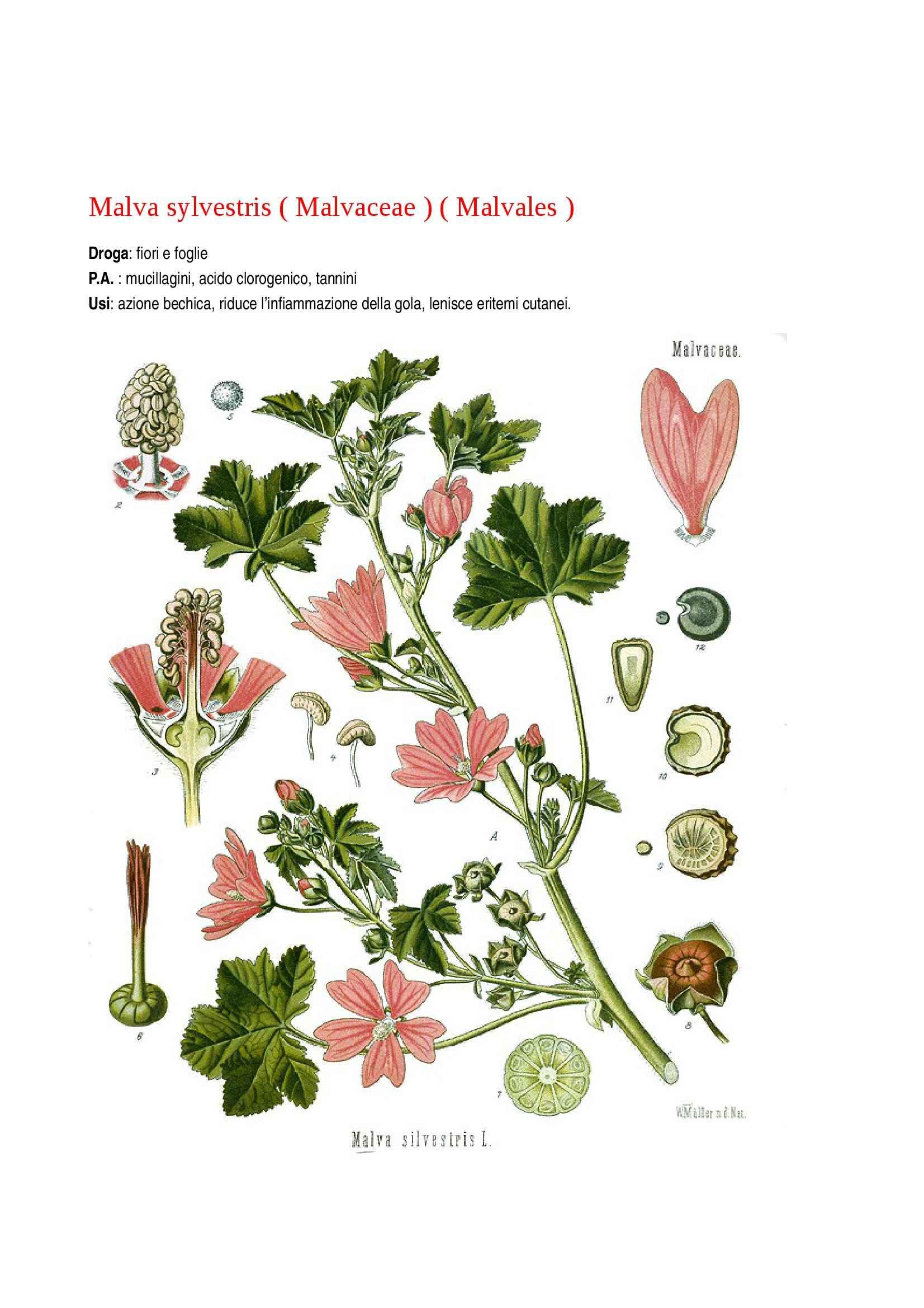 Botanica farmaceutica Pag. 21