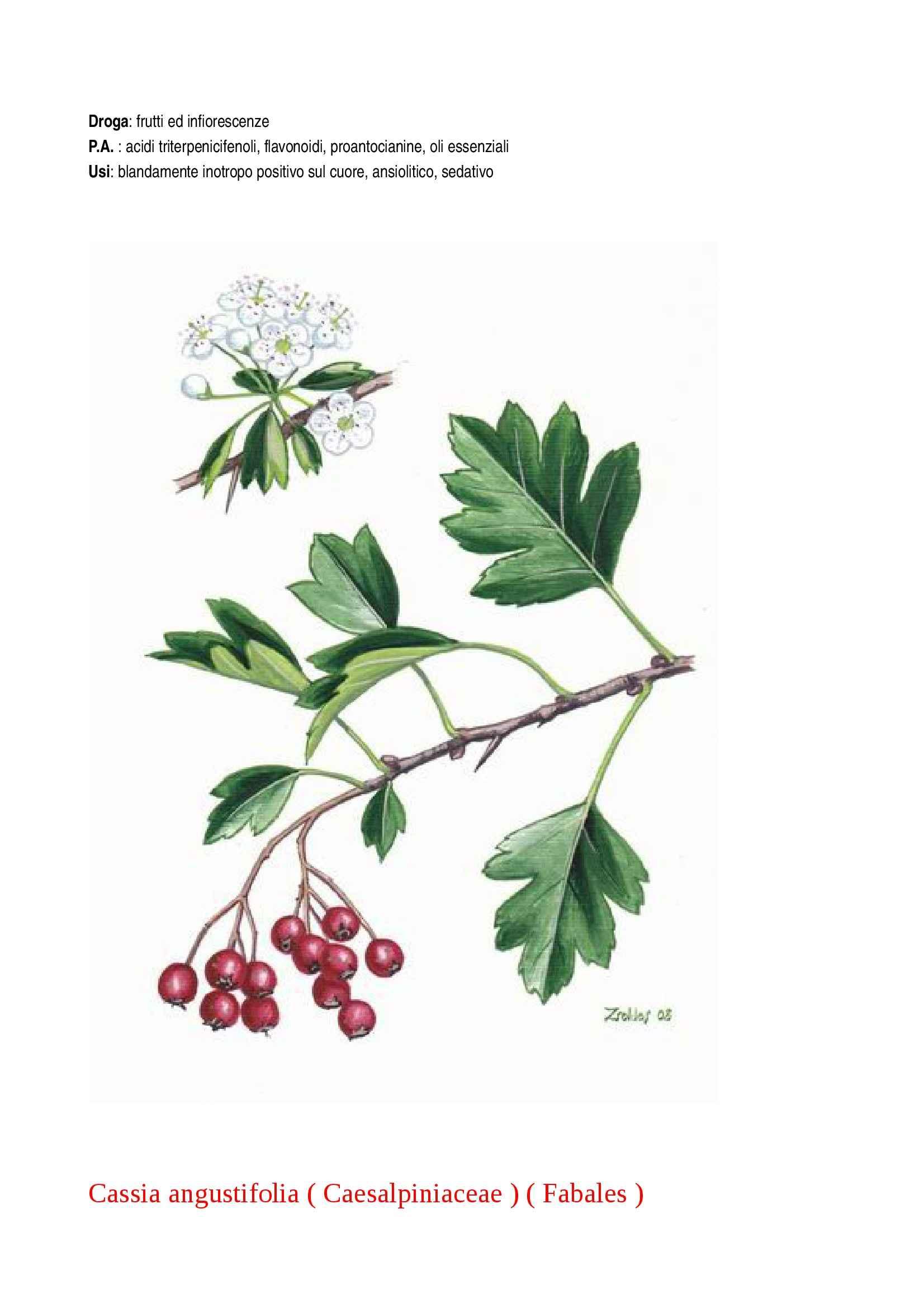Botanica farmaceutica Pag. 31