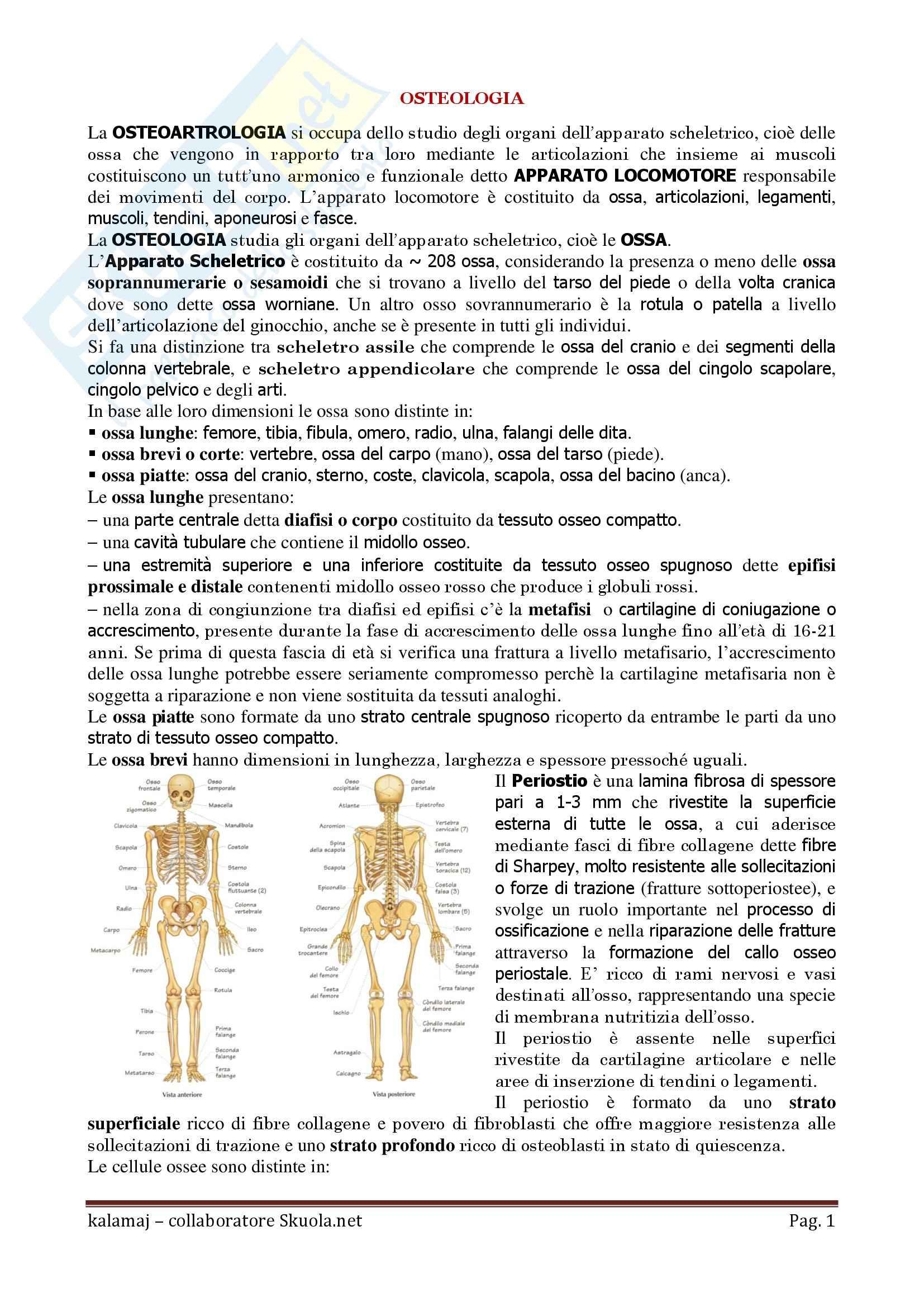 Anatomia umana - Osteologia