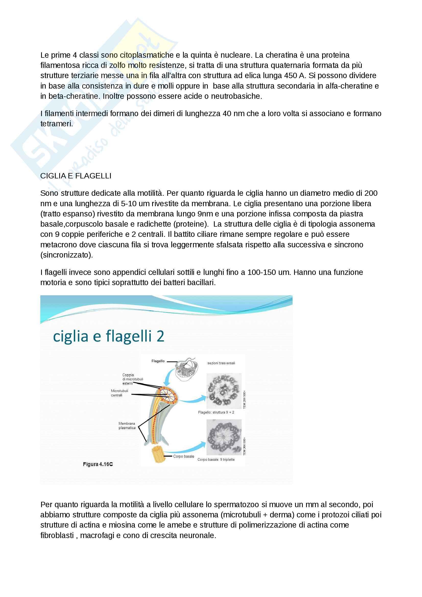 Riassunti di citologia Pag. 11