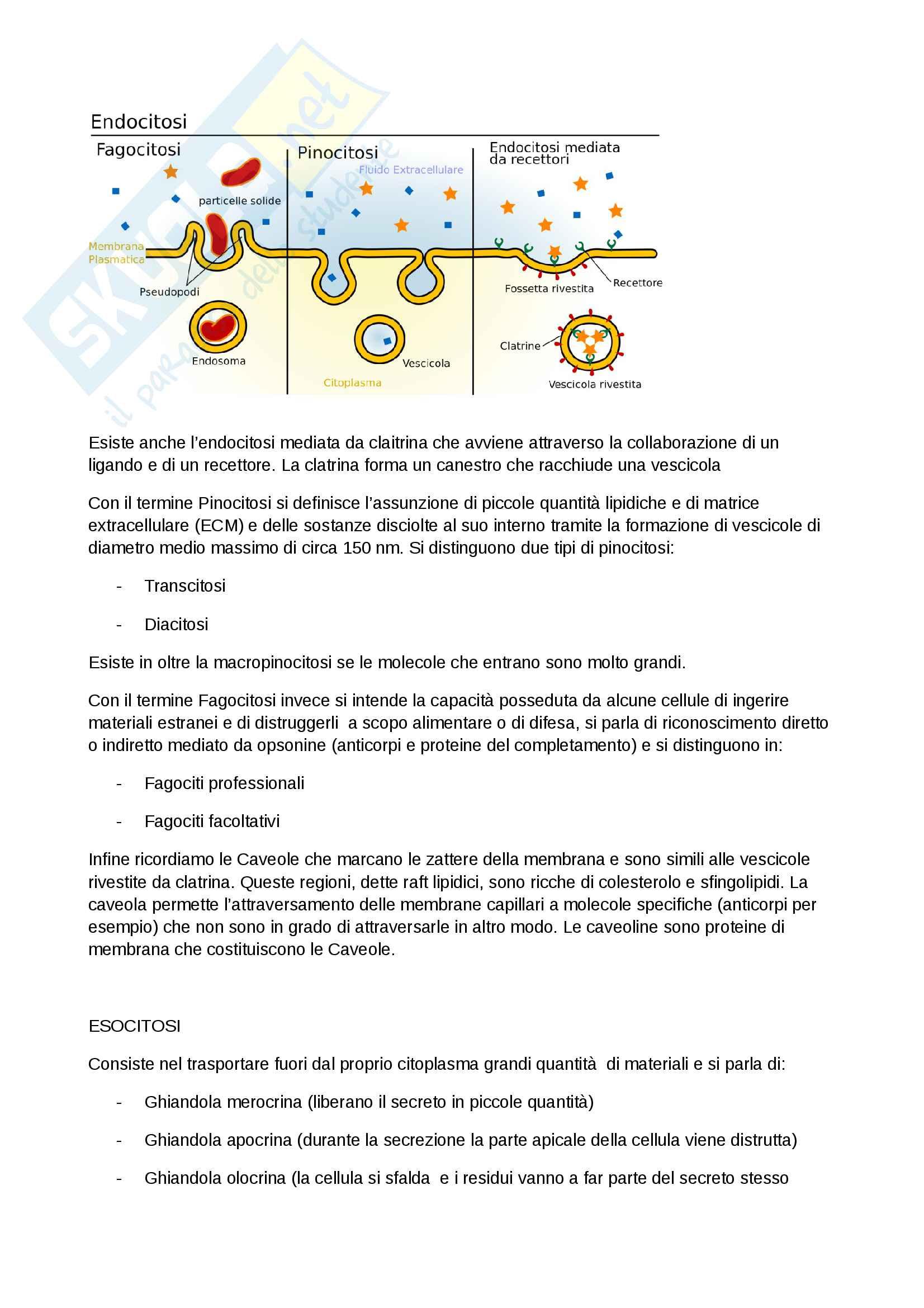 Riassunti di citologia Pag. 16