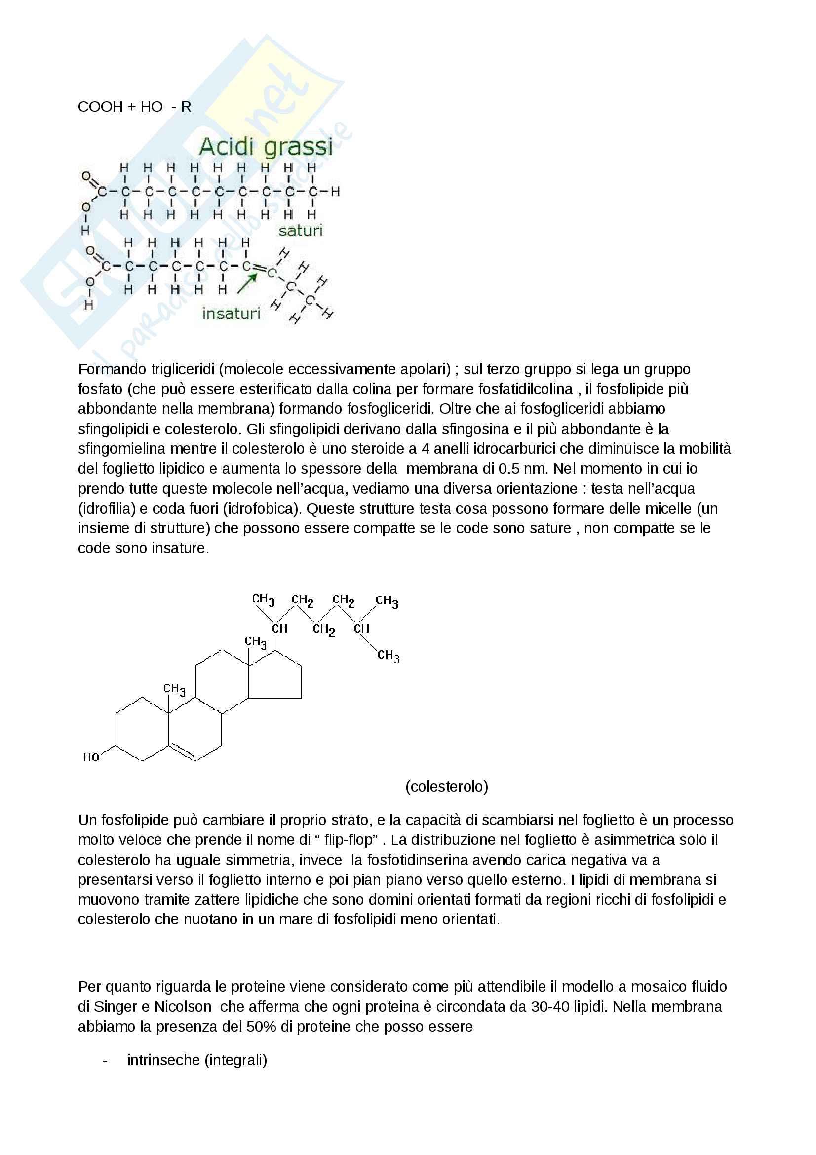 Riassunti di citologia Pag. 2