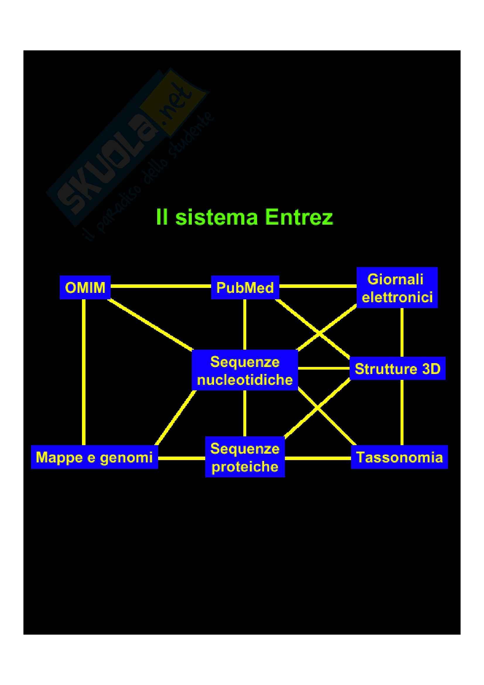 Biologia molecolare - il sistema Entrez