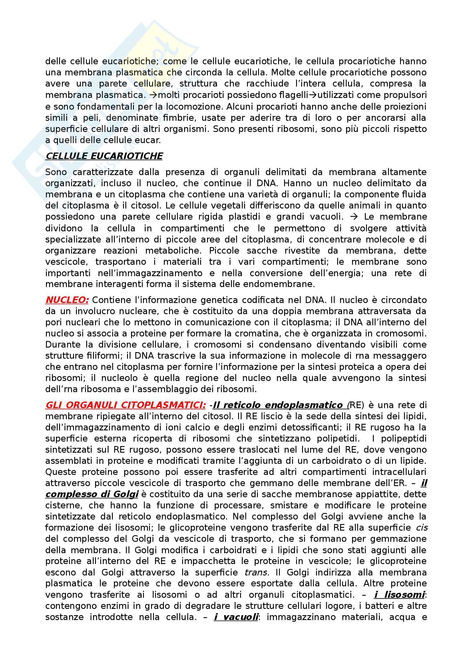 Biologia appunti scritti al pc con foto integrate Pag. 11