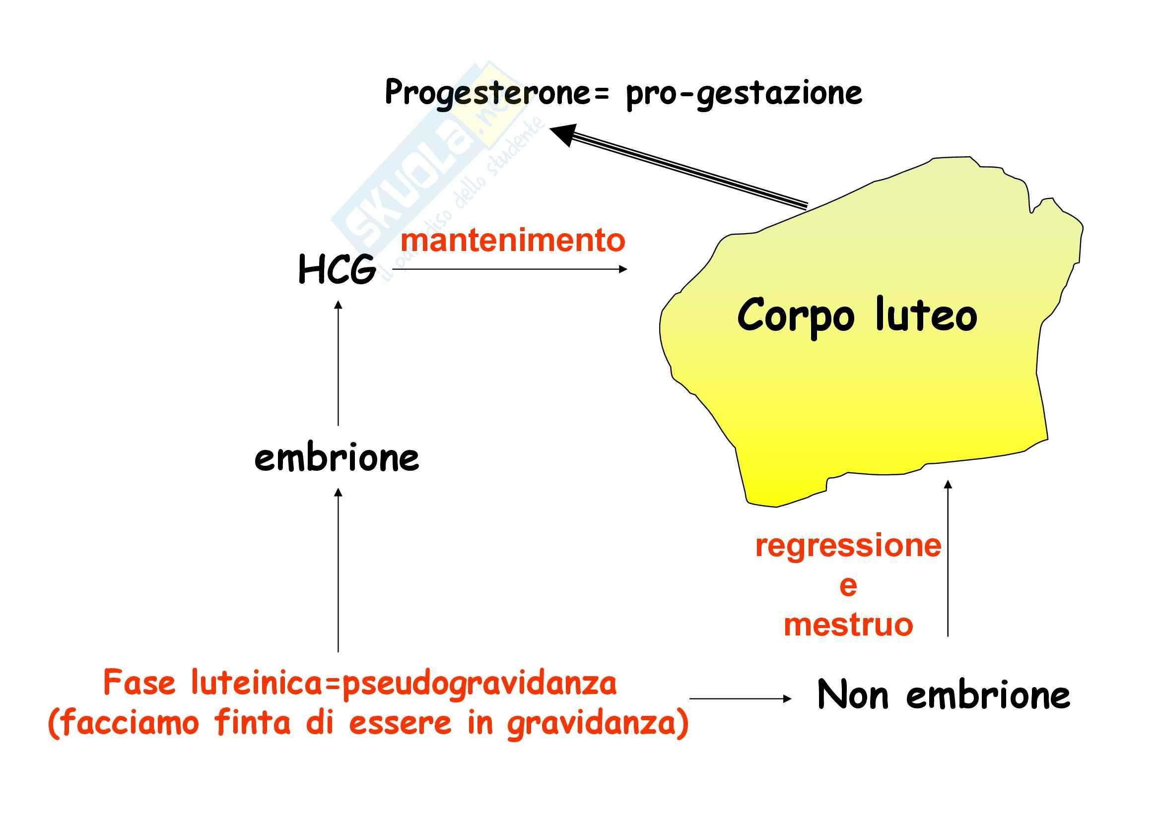 Fisiologia dell'apparato riproduttore femminile Pag. 16