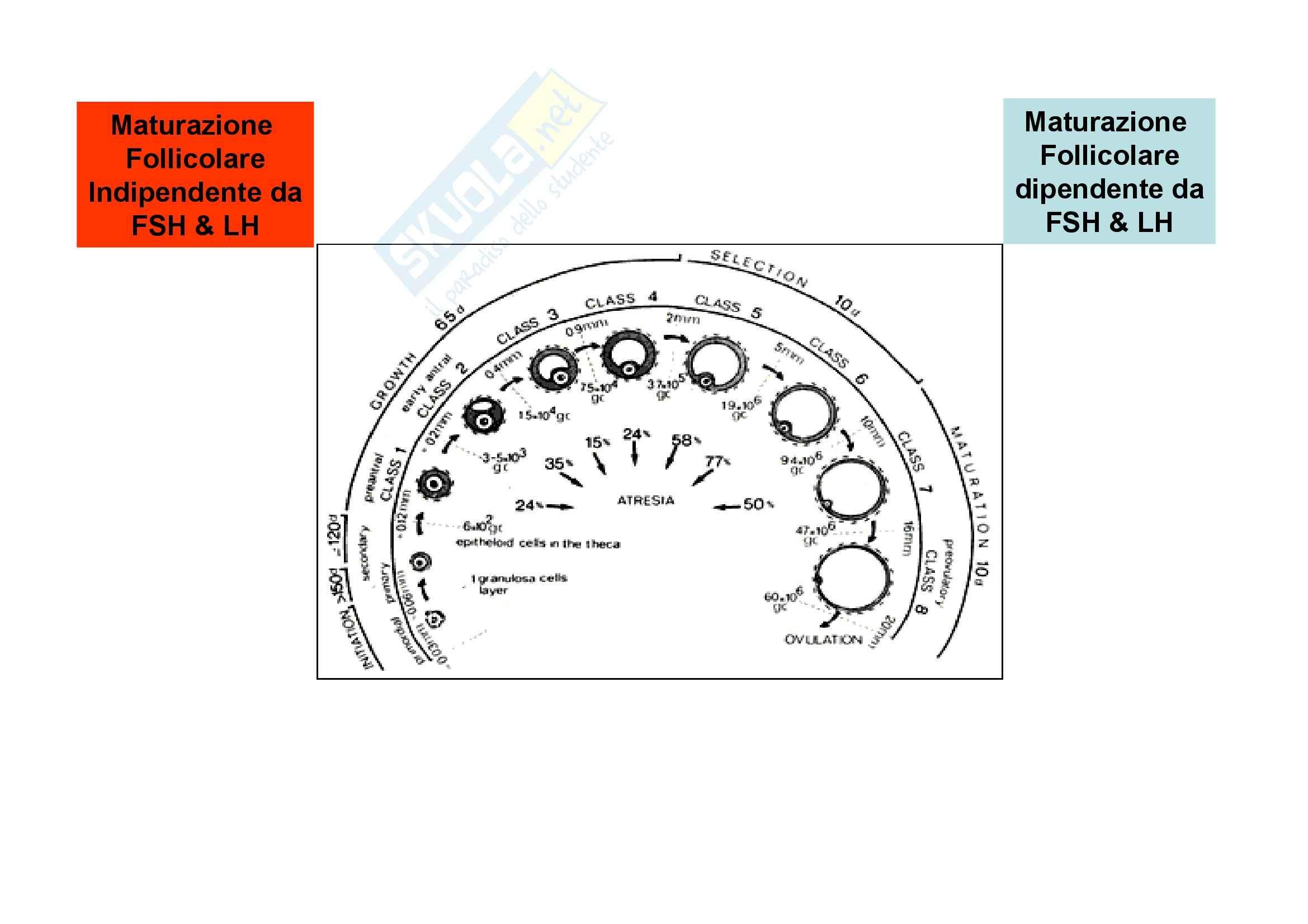 Fisiologia dell'apparato riproduttore femminile Pag. 6