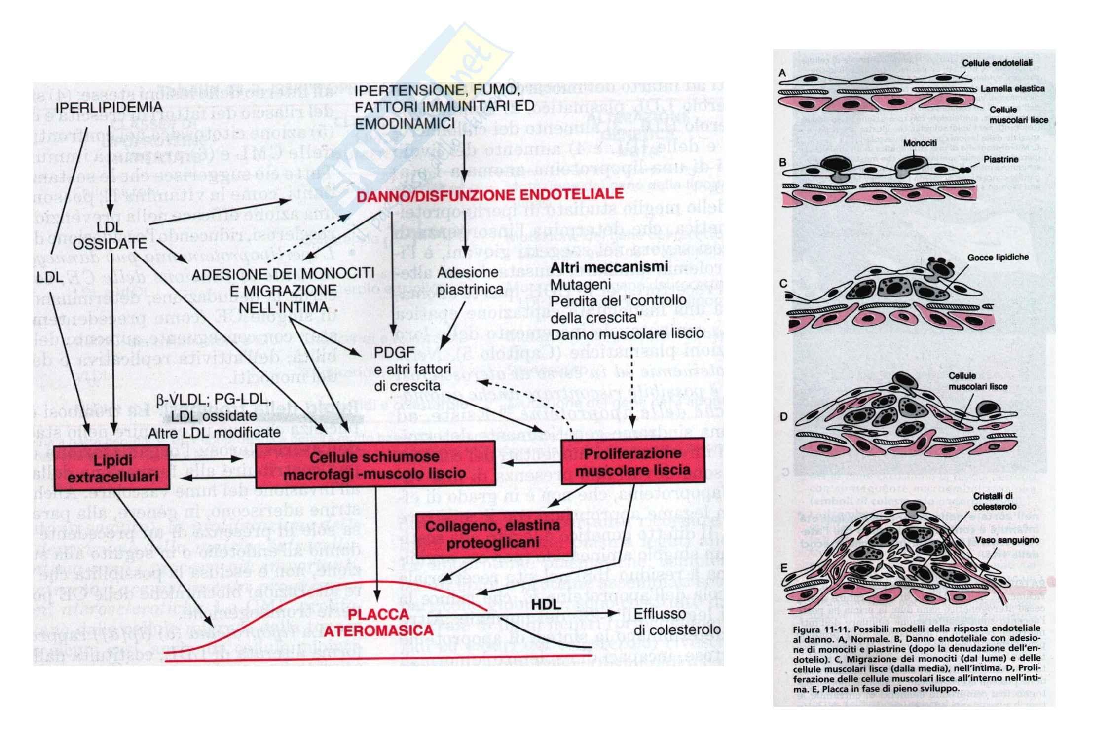 Cardiochirurgia - arteriopatia cronica ostruttiva arti inferiori Pag. 11