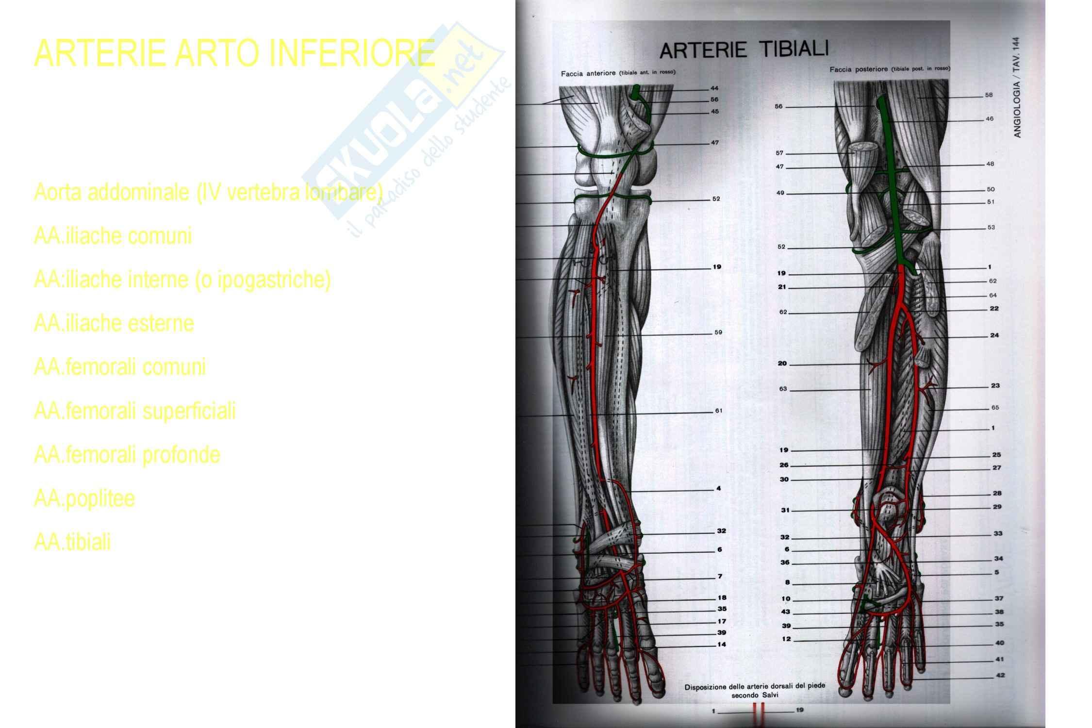 Cardiochirurgia - arteriopatia cronica ostruttiva arti inferiori Pag. 6
