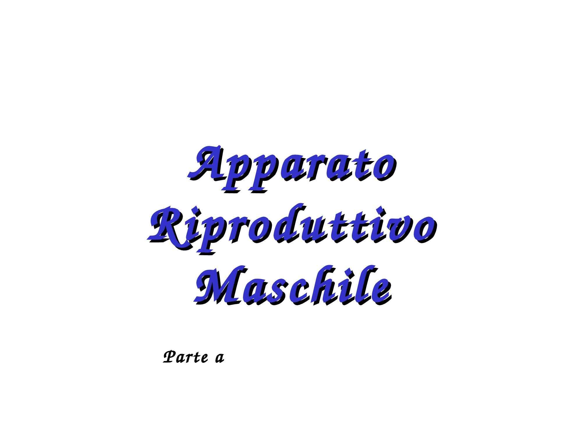 Apparato genitale maschile: fase testicolare