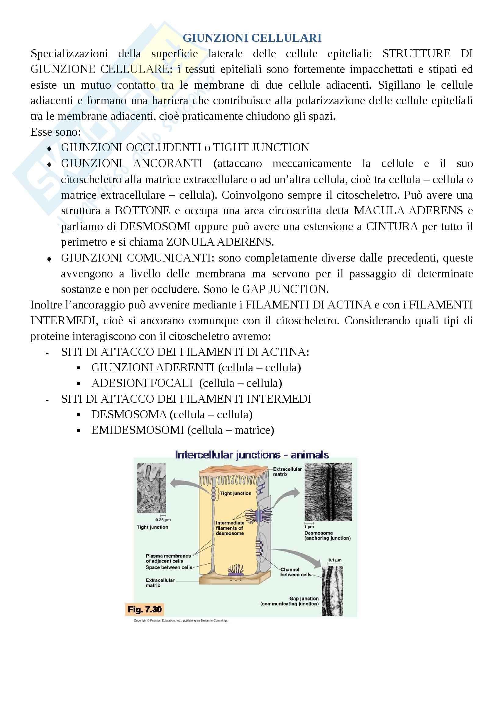 appunto A. Teti Citologia, istologia ed embriologia