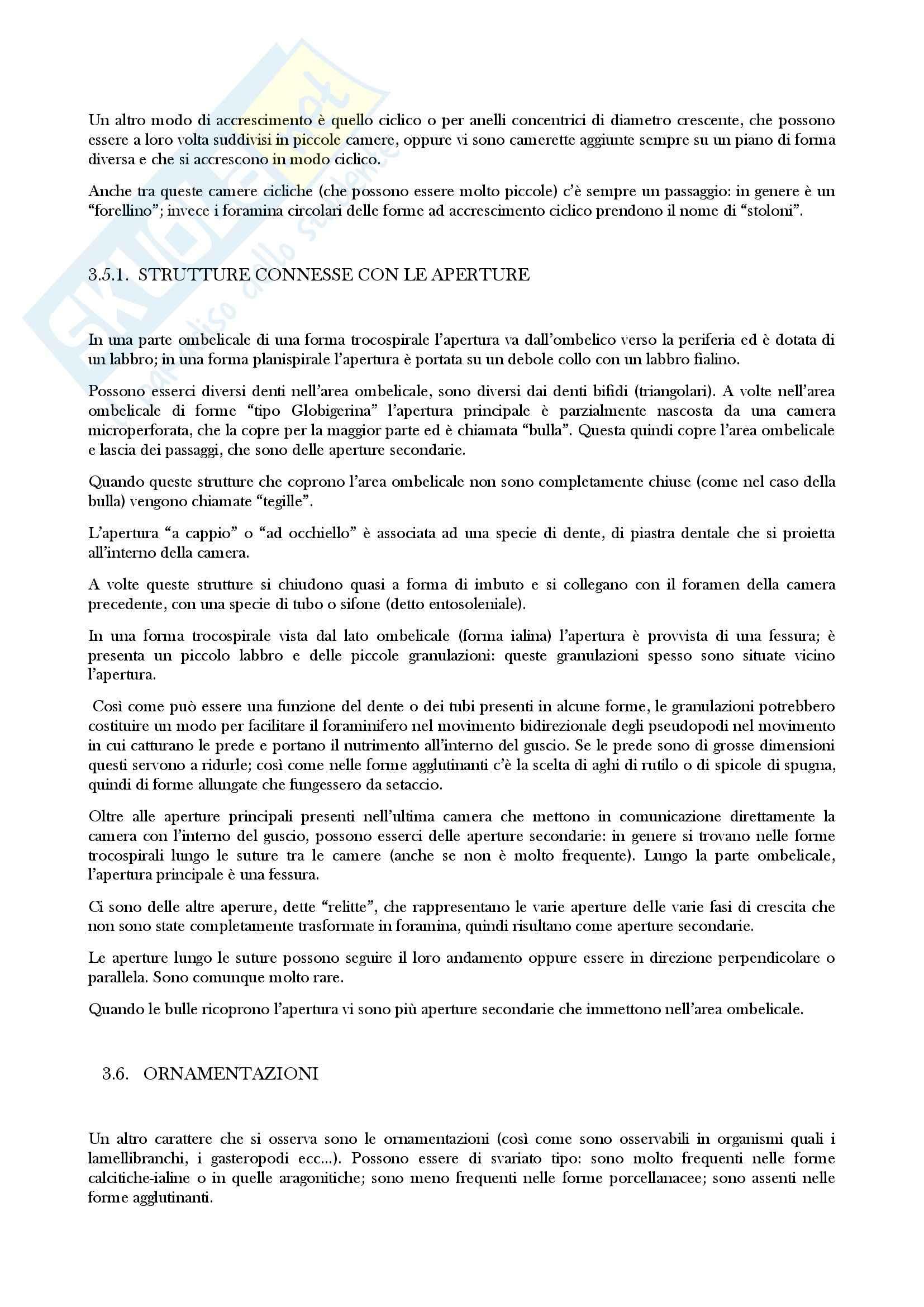 Micropaleontologia - elaborato Pag. 21