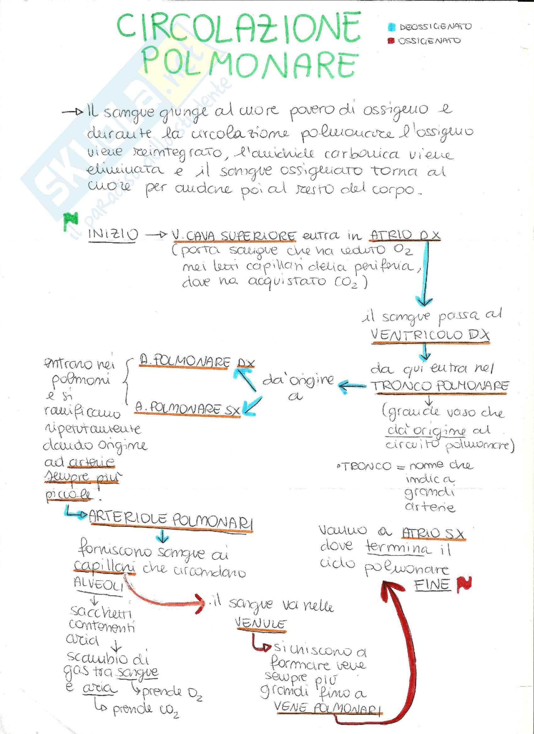 Appunti anatomia umana