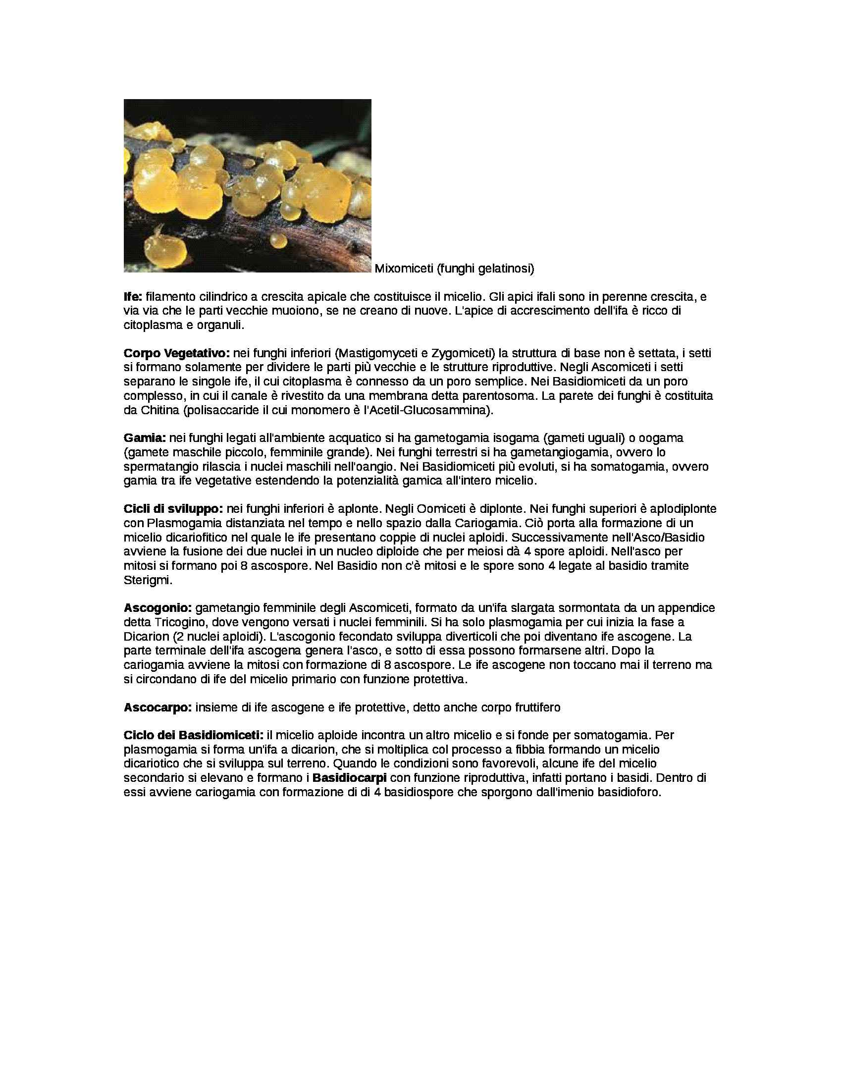 Botanica - Appunti Pag. 6