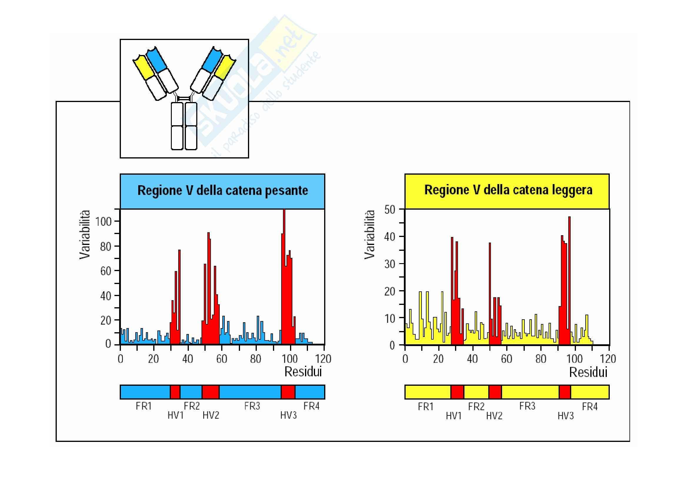 Immunologia - interazione Ag-Ab Pag. 2