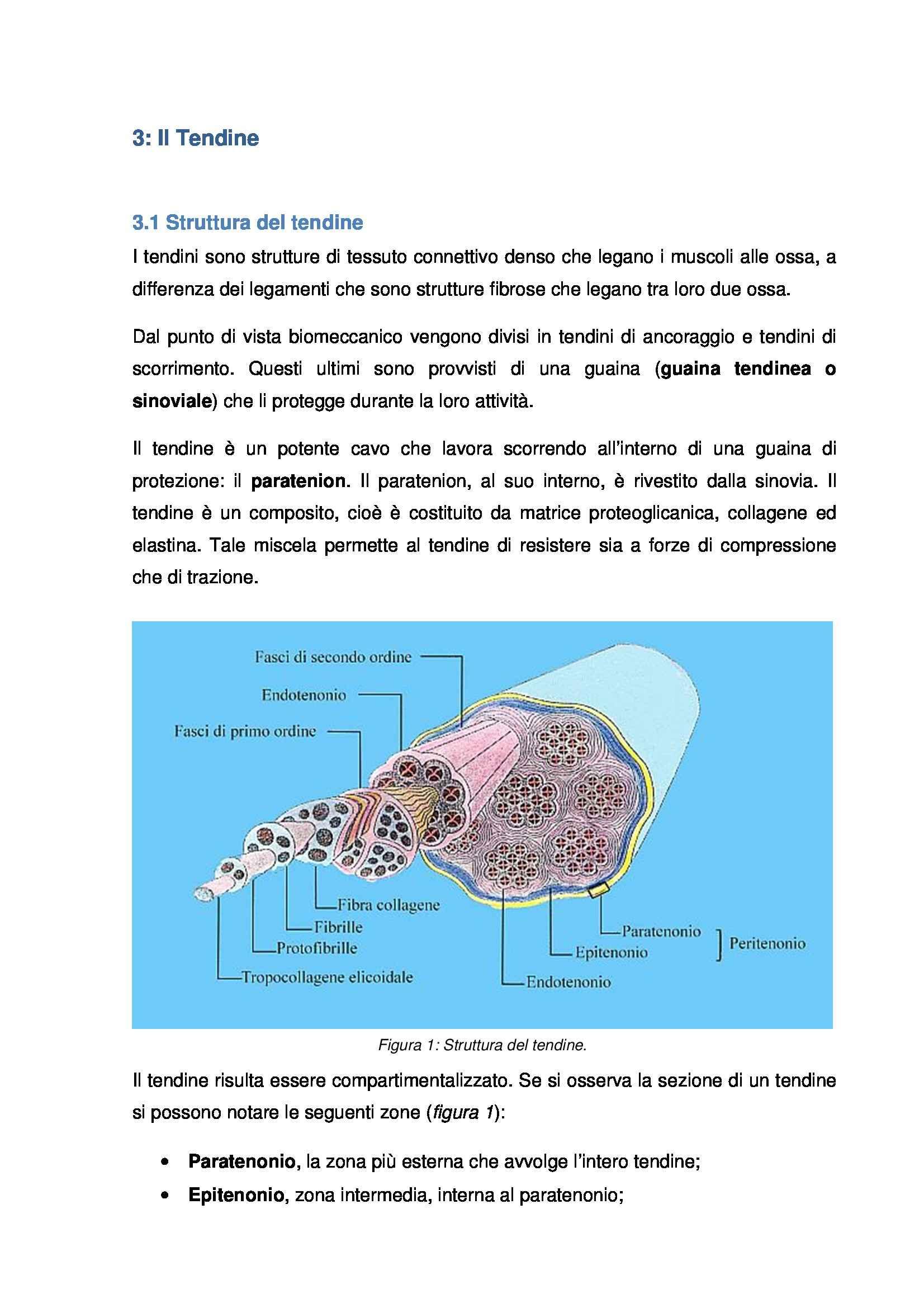 Istologia e embriologia - tendine