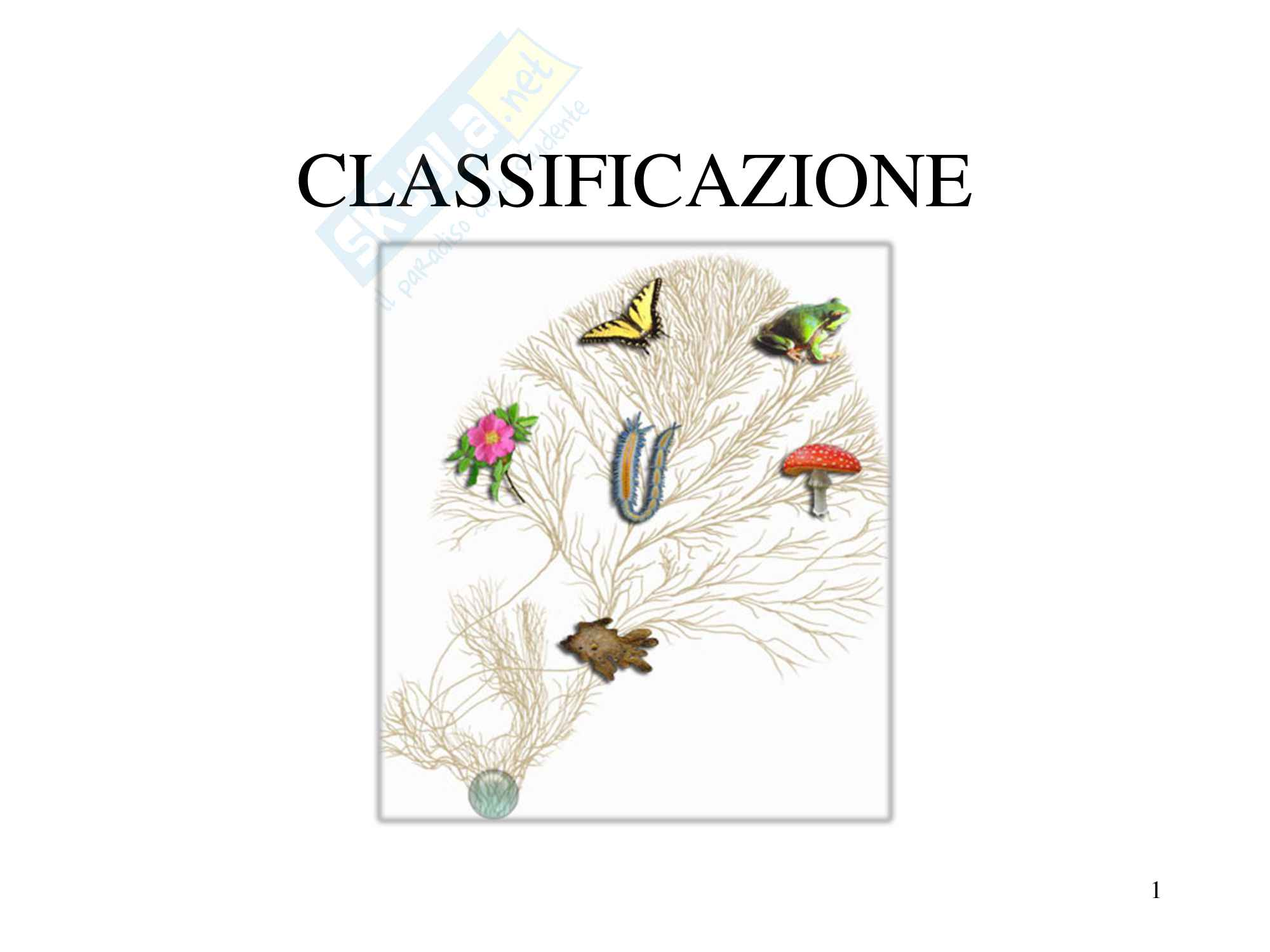 Classificazione e sistematica, zoologia, scienze biologiche