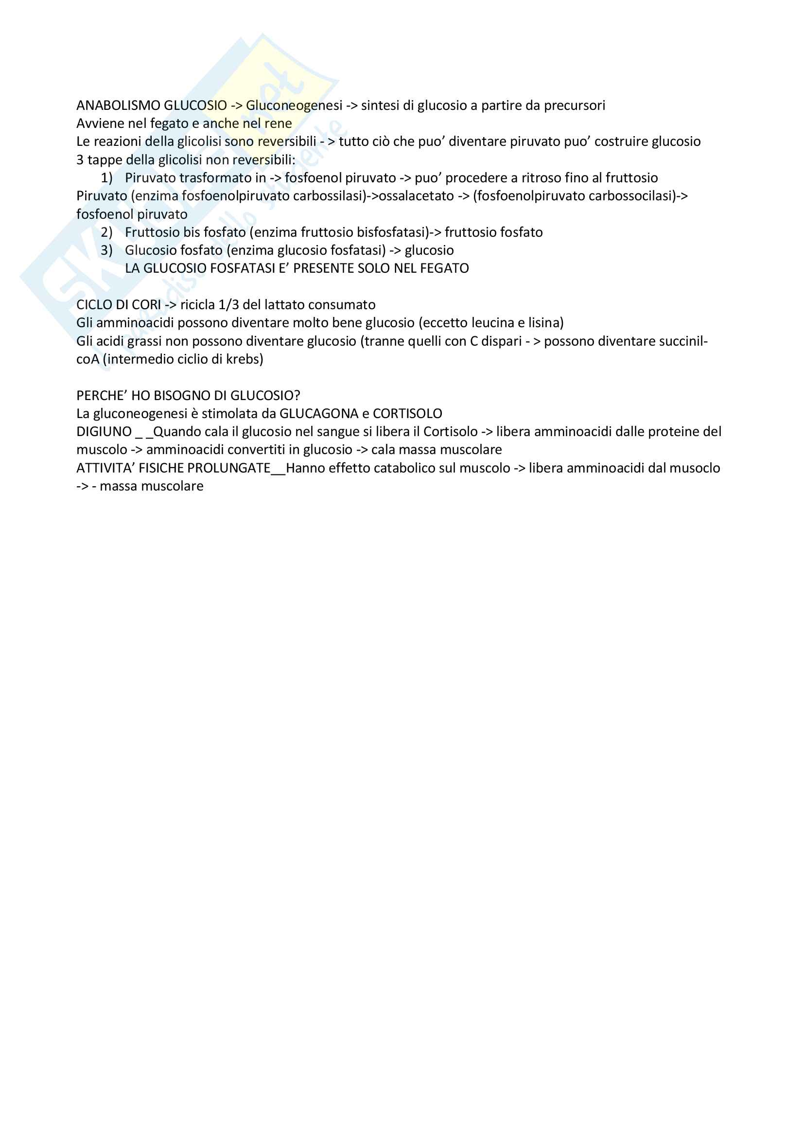 Biochimica Metabolica, prof. Stefanelli