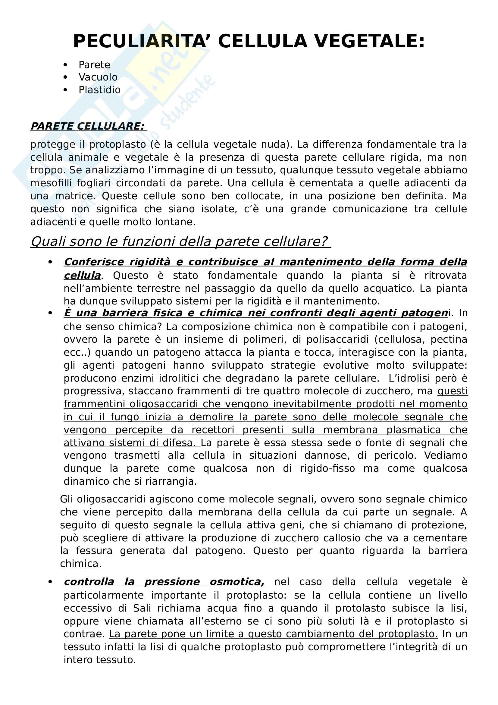Appunti biologia vegetale Pag. 16