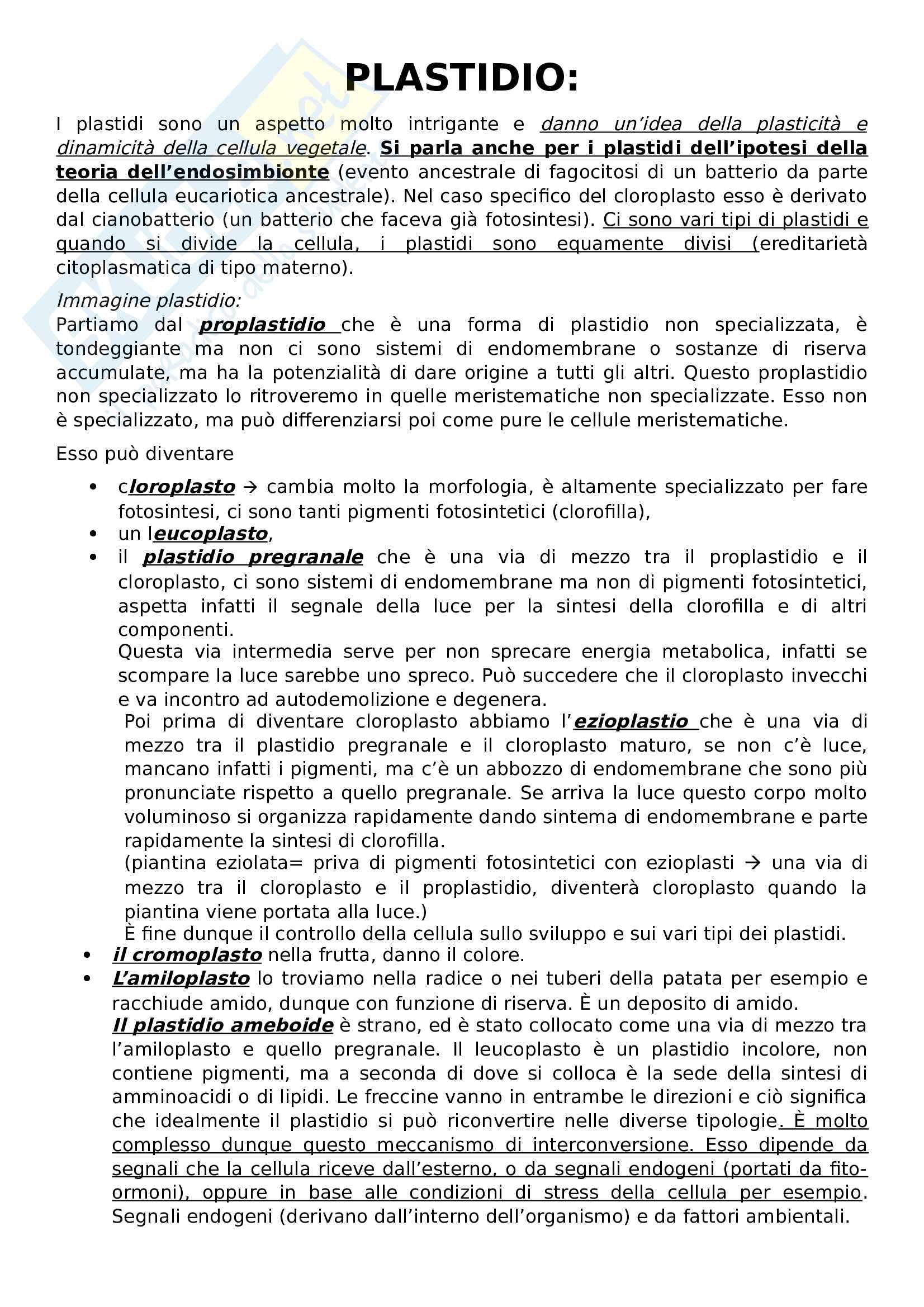 Appunti biologia vegetale Pag. 21