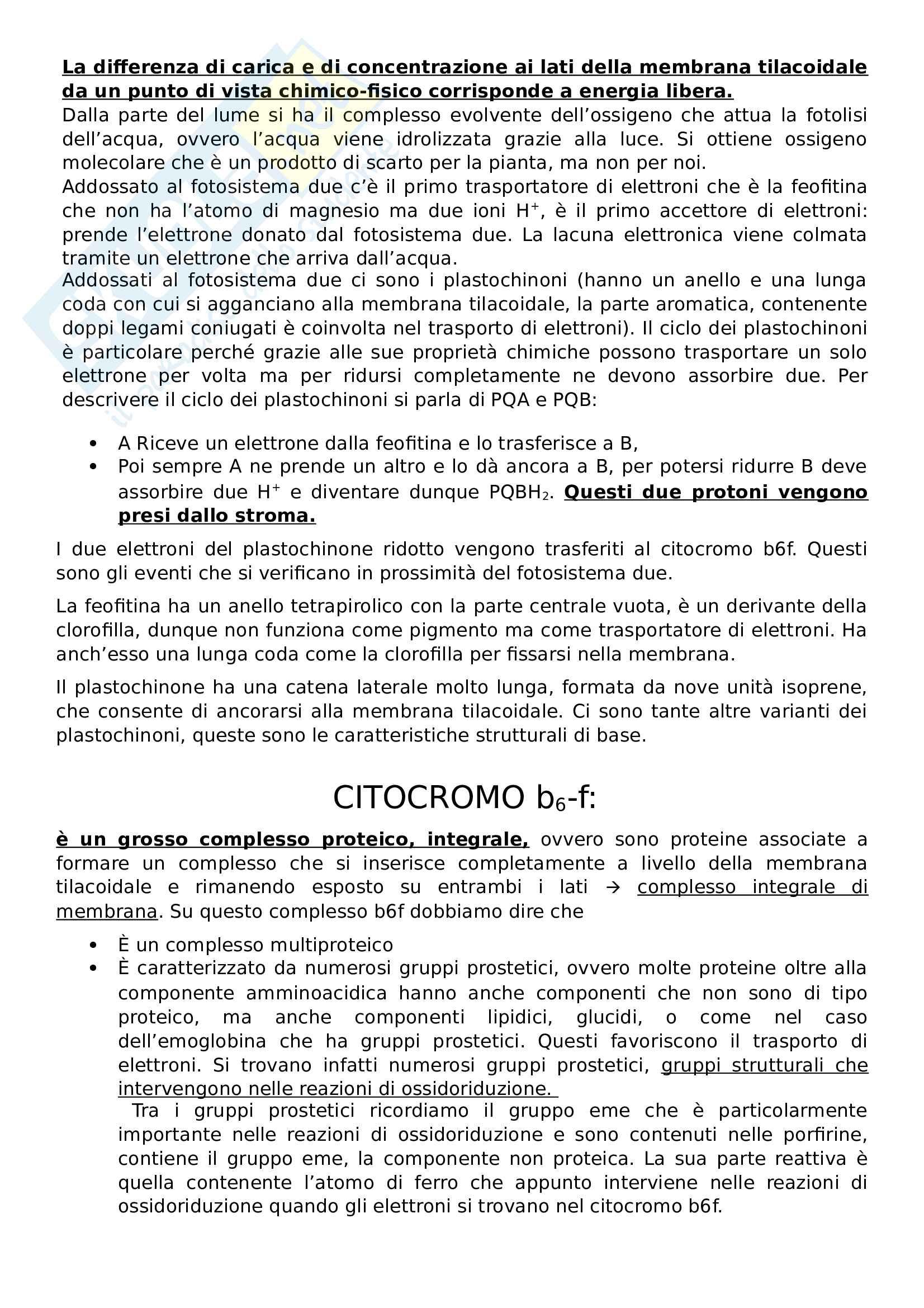 Appunti biologia vegetale Pag. 41