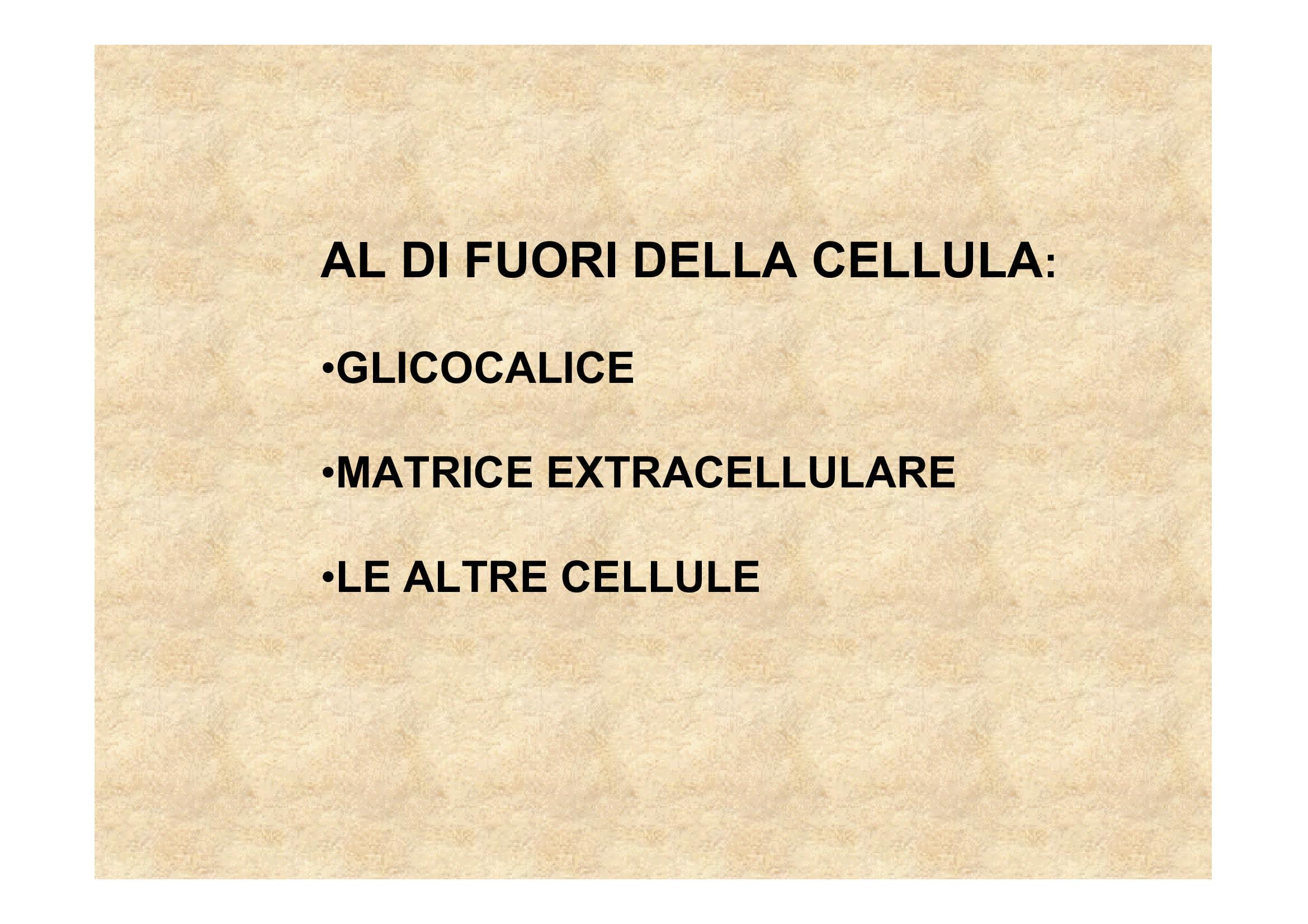 Matrice extracellulare e fibre di collagene
