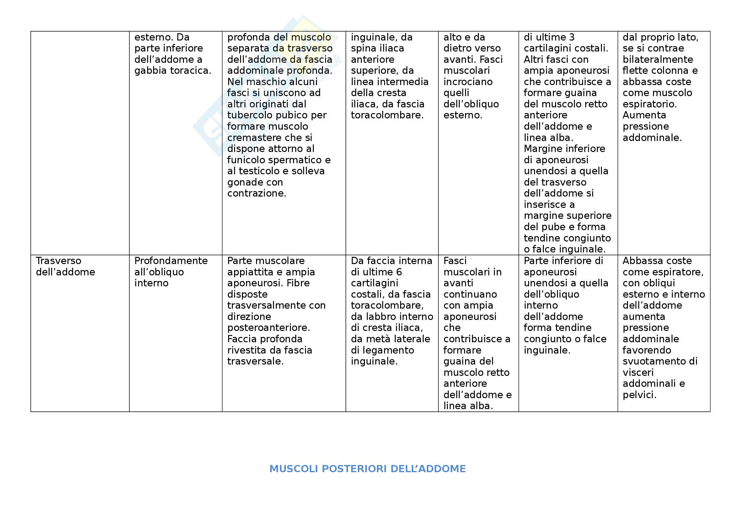 Muscoli - Tabella dei muscoli del corpo divisi per sede. Indicazione di posizione, caratteristiche, origine, decorso, inserzione, azione Pag. 16