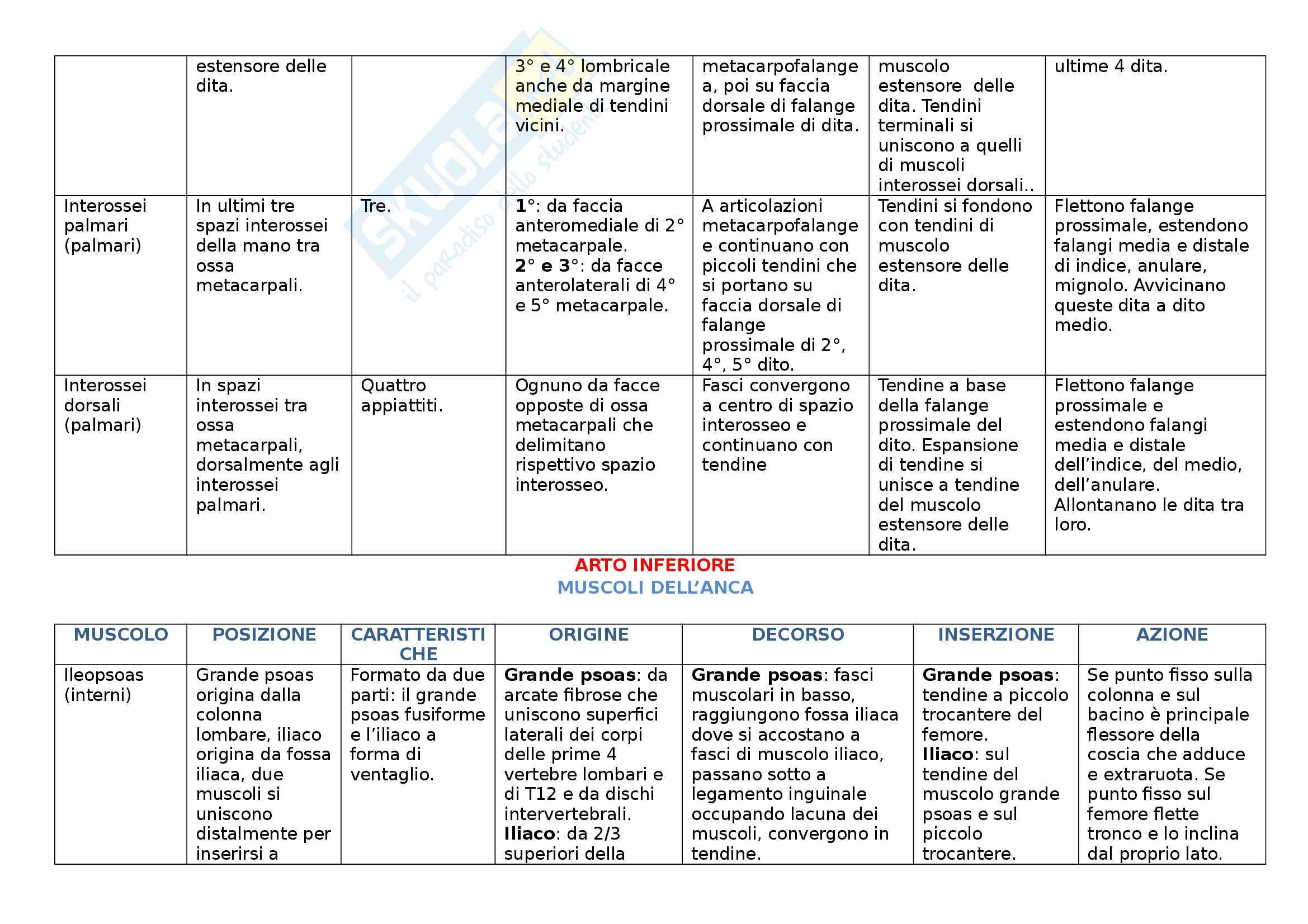 Muscoli - Tabella dei muscoli del corpo divisi per sede. Indicazione di posizione, caratteristiche, origine, decorso, inserzione, azione Pag. 26