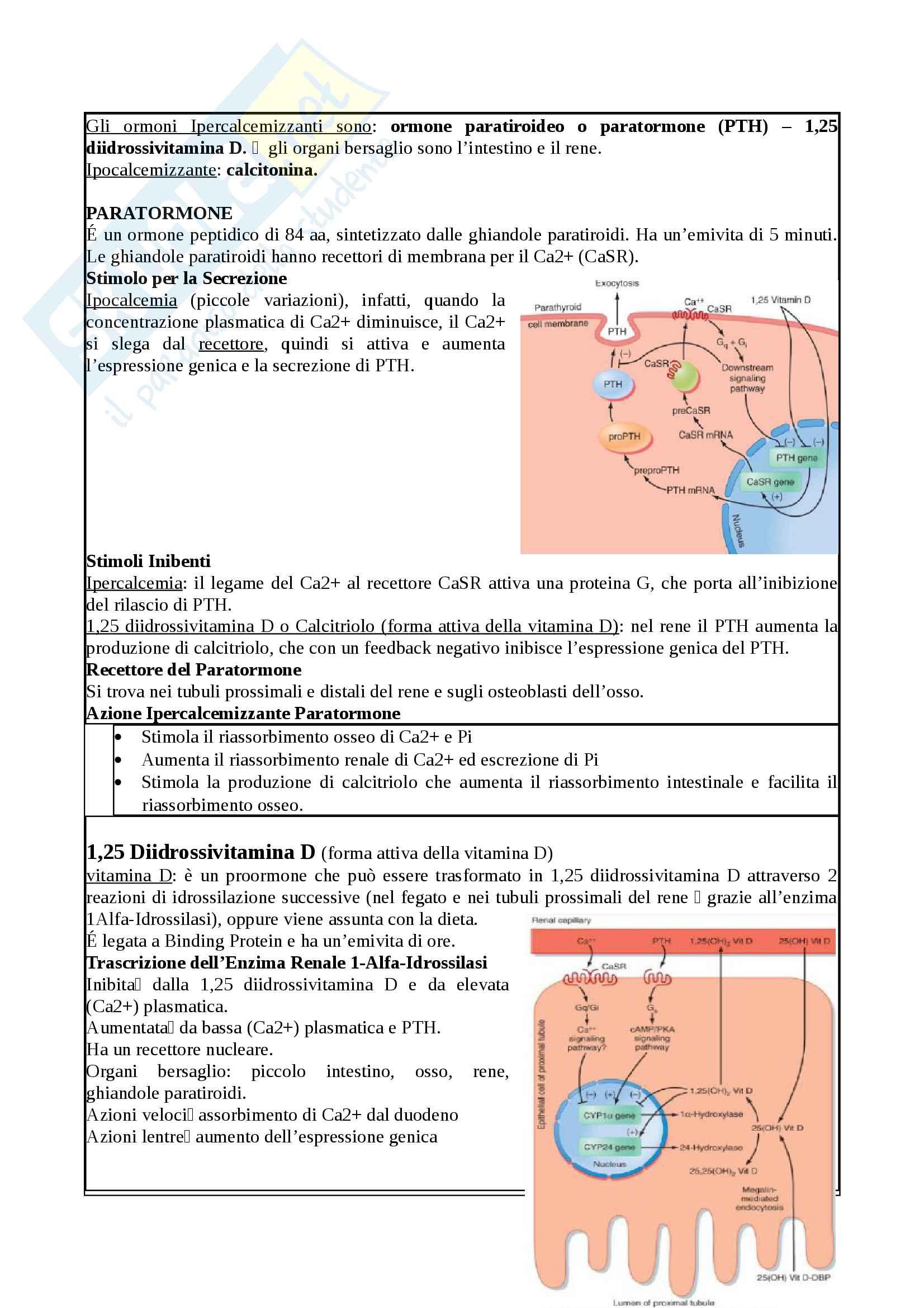 Appunti - Fisiologia clinica dell'esercizio Pag. 66