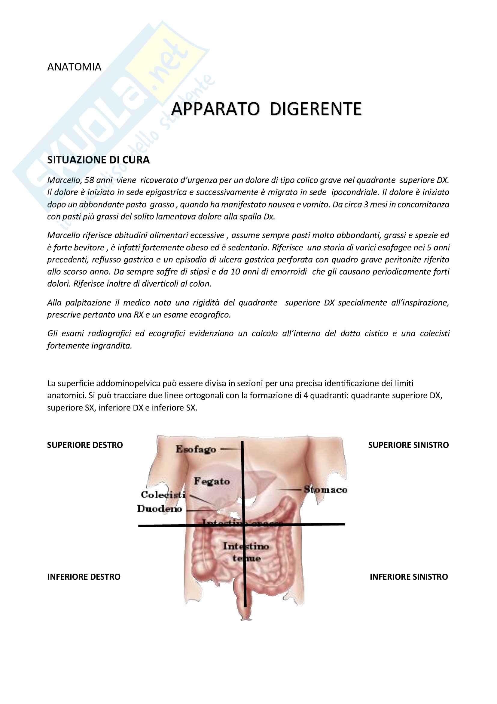 Appunti Anatomia