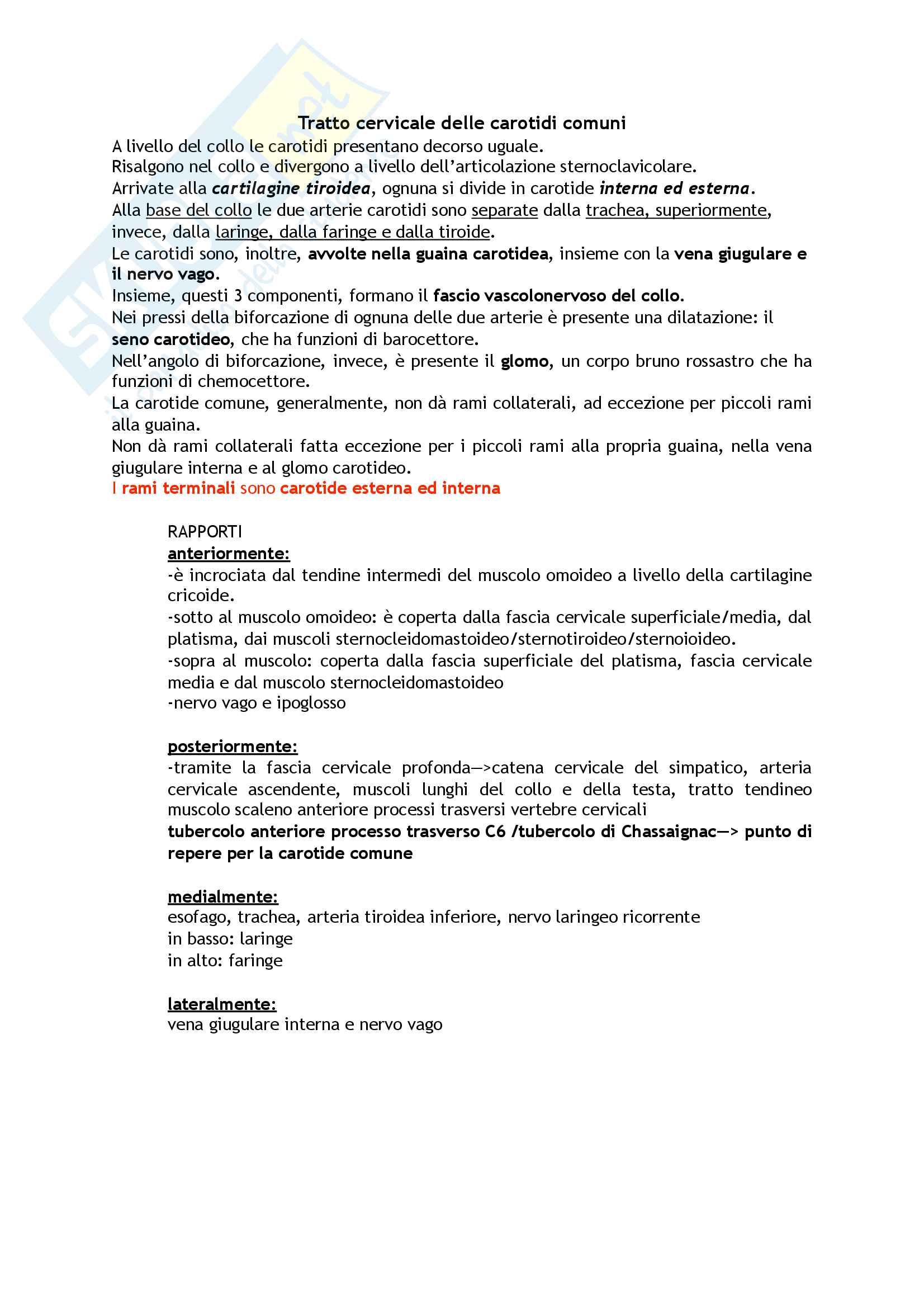 Tronco Brachiocefalico e Arterie Carotidi Pag. 2