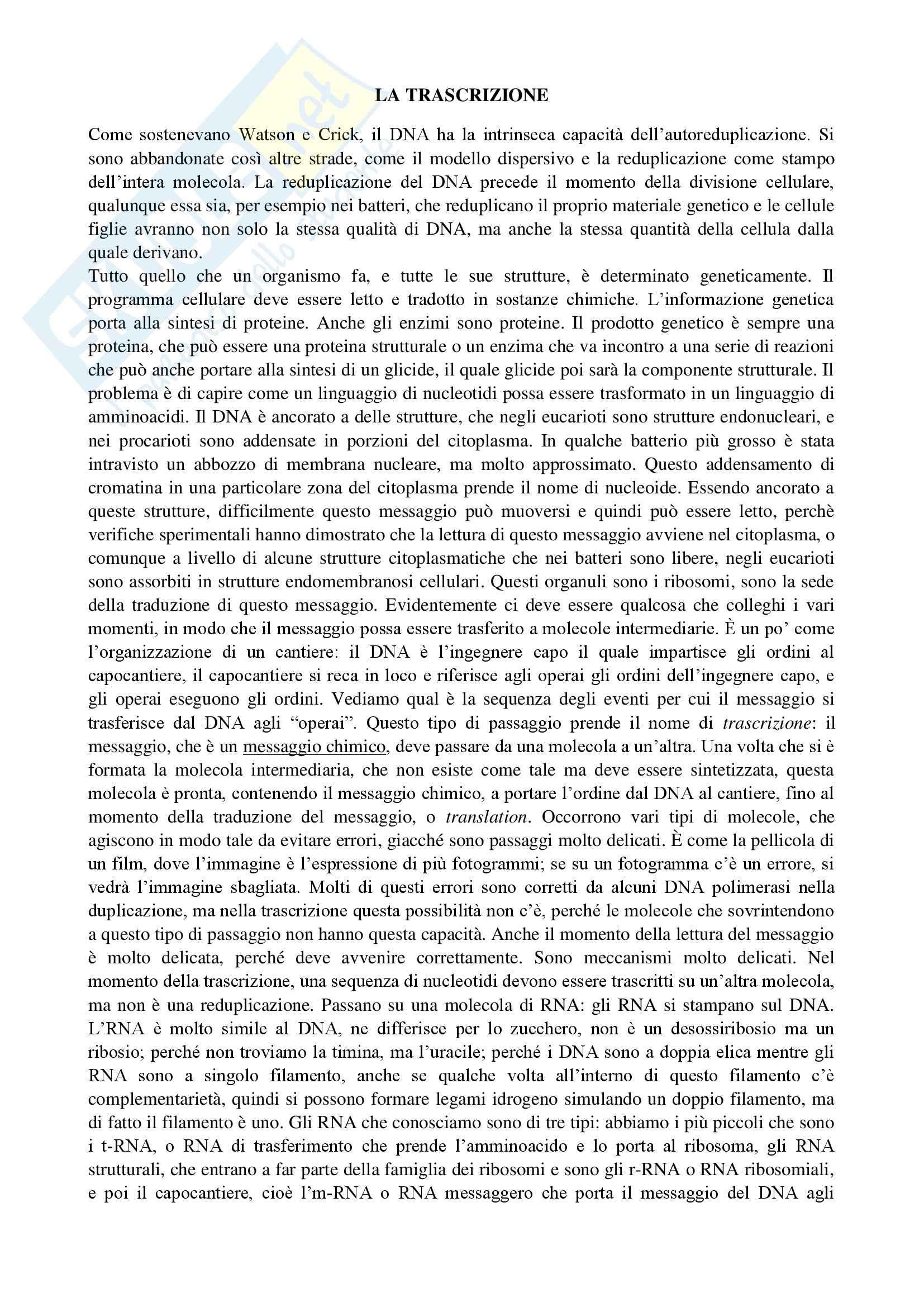 Biologia e genetica - trascrizione nei procarioti