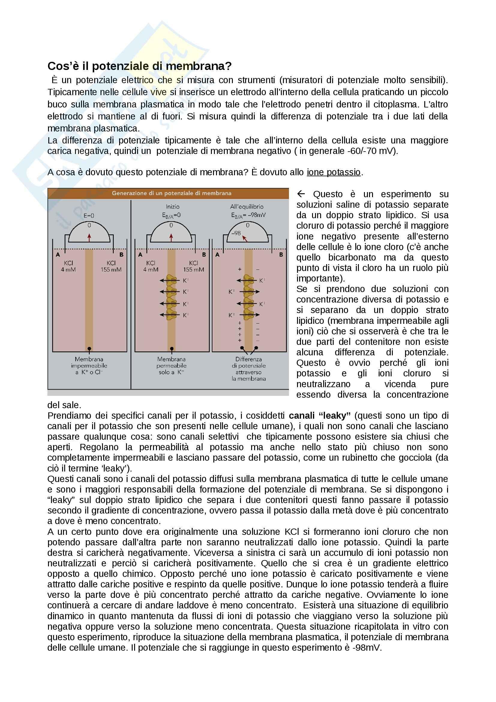 Citologia - potenziale di membrana e il potenziale d'azione