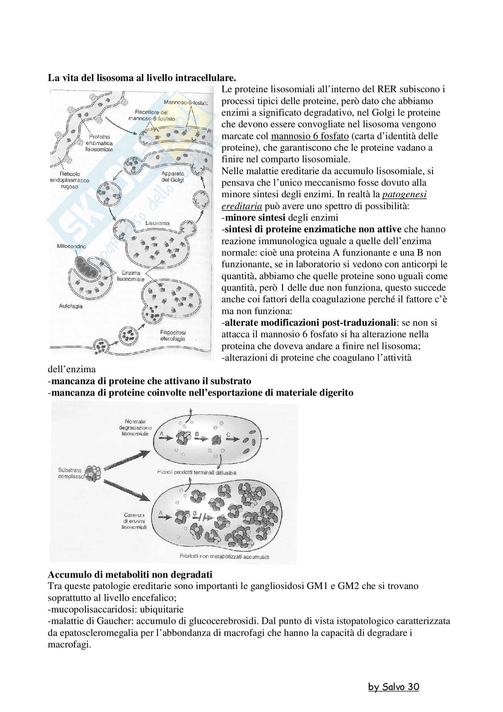Patologia generale - la vita dei lisosomi a livello intracellulare