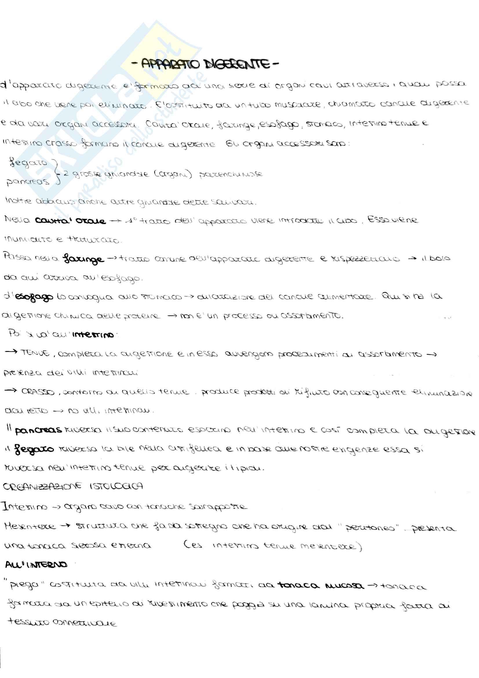 Appunti di anatomia umana